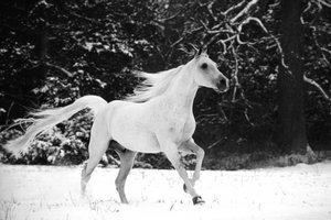 Дикие Мустанги лошади | Güzel atlar, Hayvan resimleri, At sevgisi | 200x300