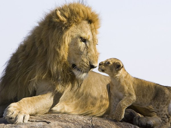 Камень лев кот