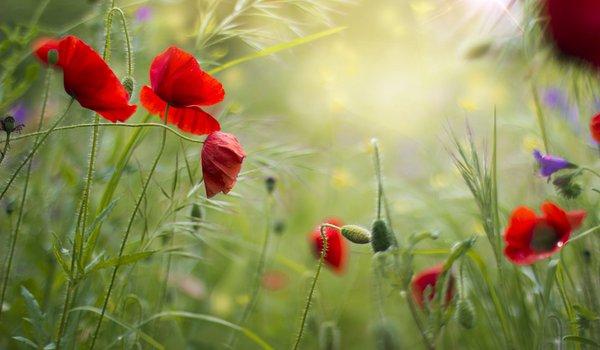 Бесплатно обои на рабочий стол полевые цветы скачать 8