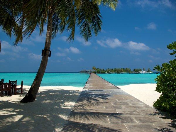 Обои На Рабочий Стол Пляж Пальмы