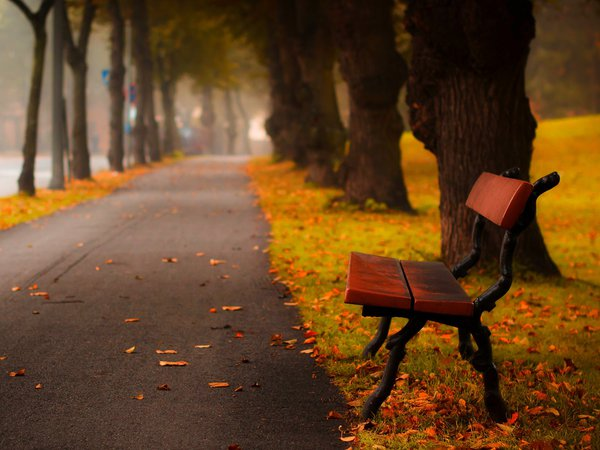 autumn, bench, colors, forest, grass, hdr, leaves, nature, park, road, trees, walk, деревья, лес, листья, осень, парк, природа, прогулка, скамейка, трава