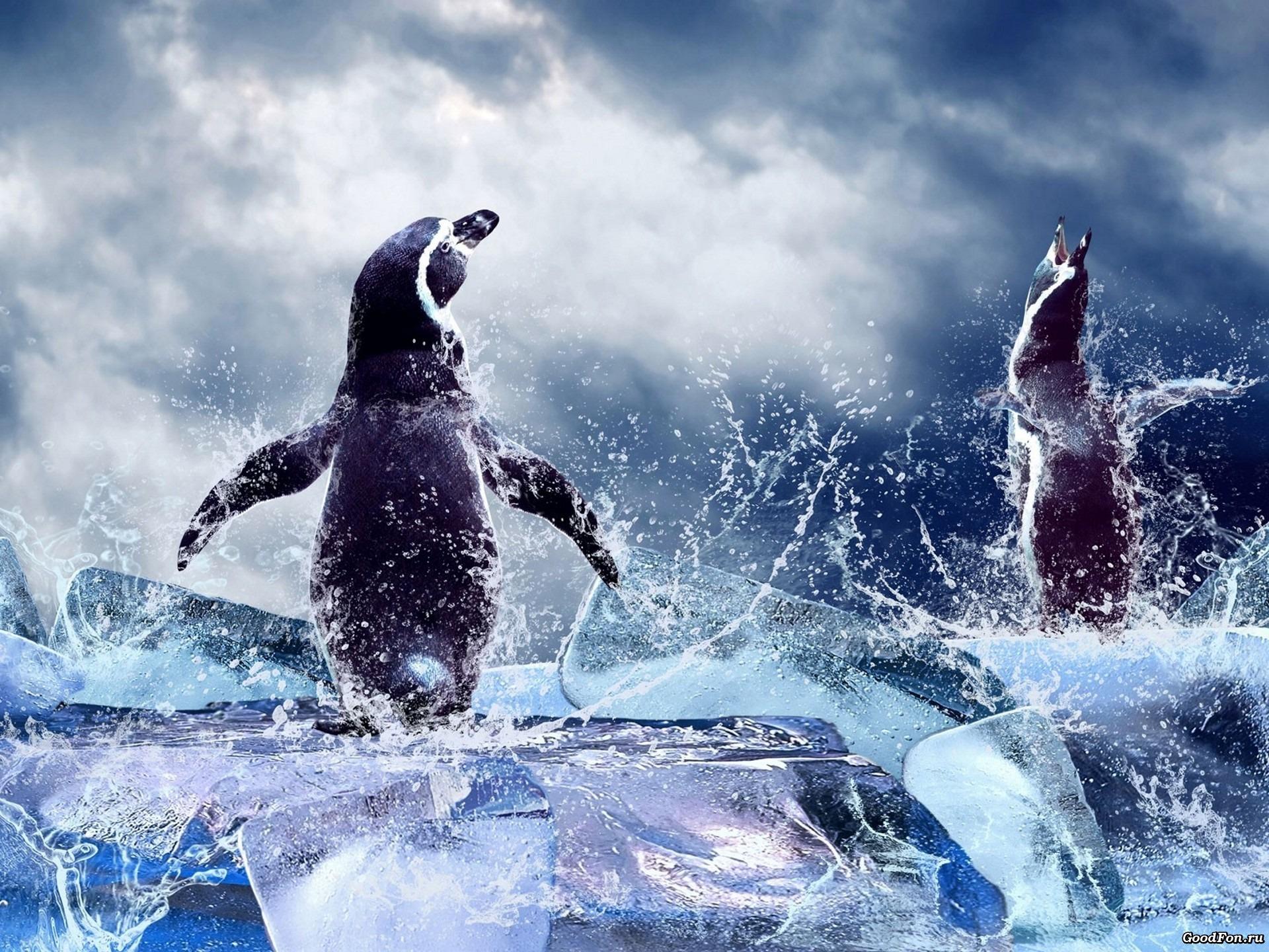 пингвины на глыбе льда  № 91290  скачать