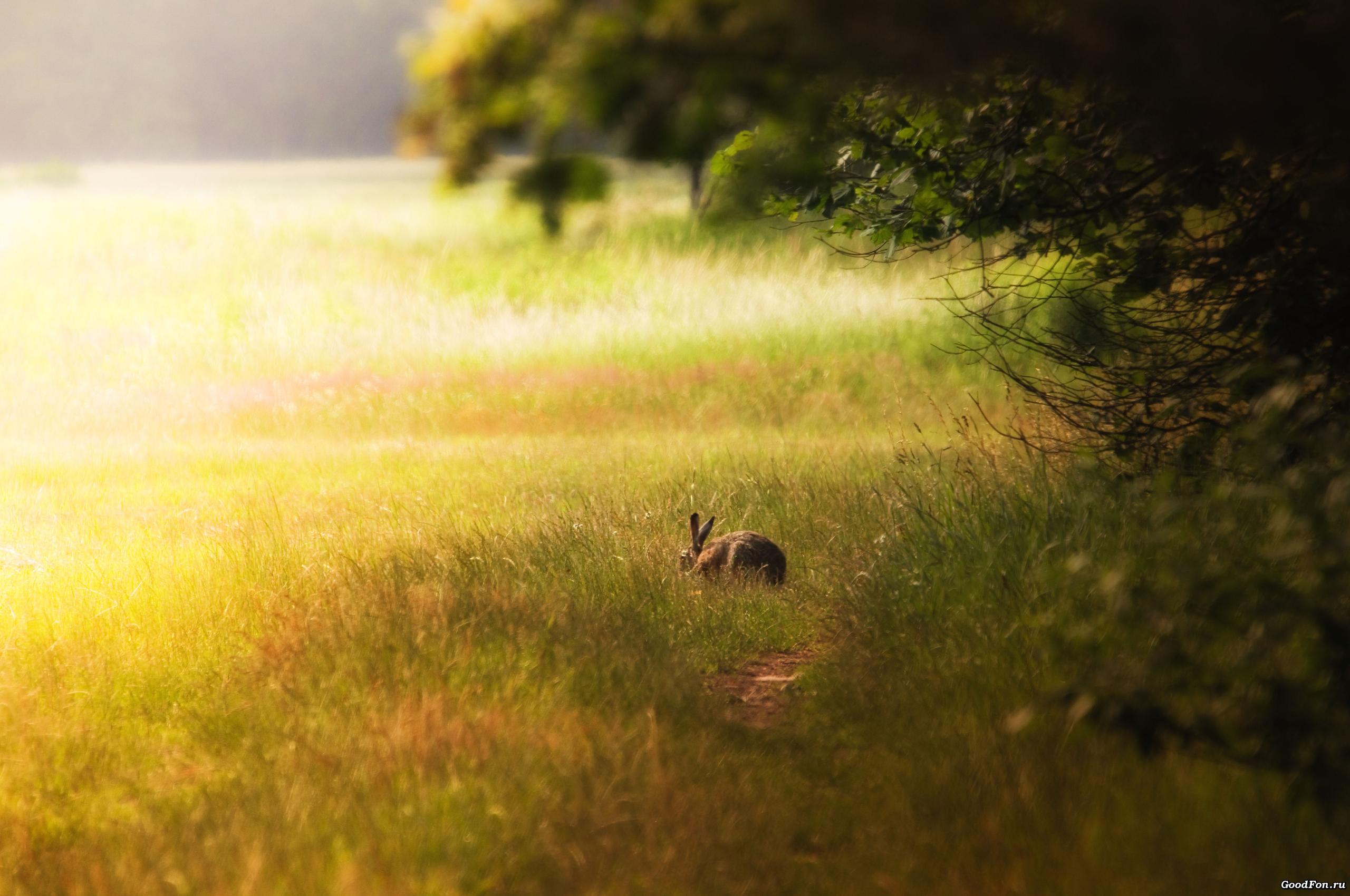 кролик девушка природа животное  № 1594115  скачать