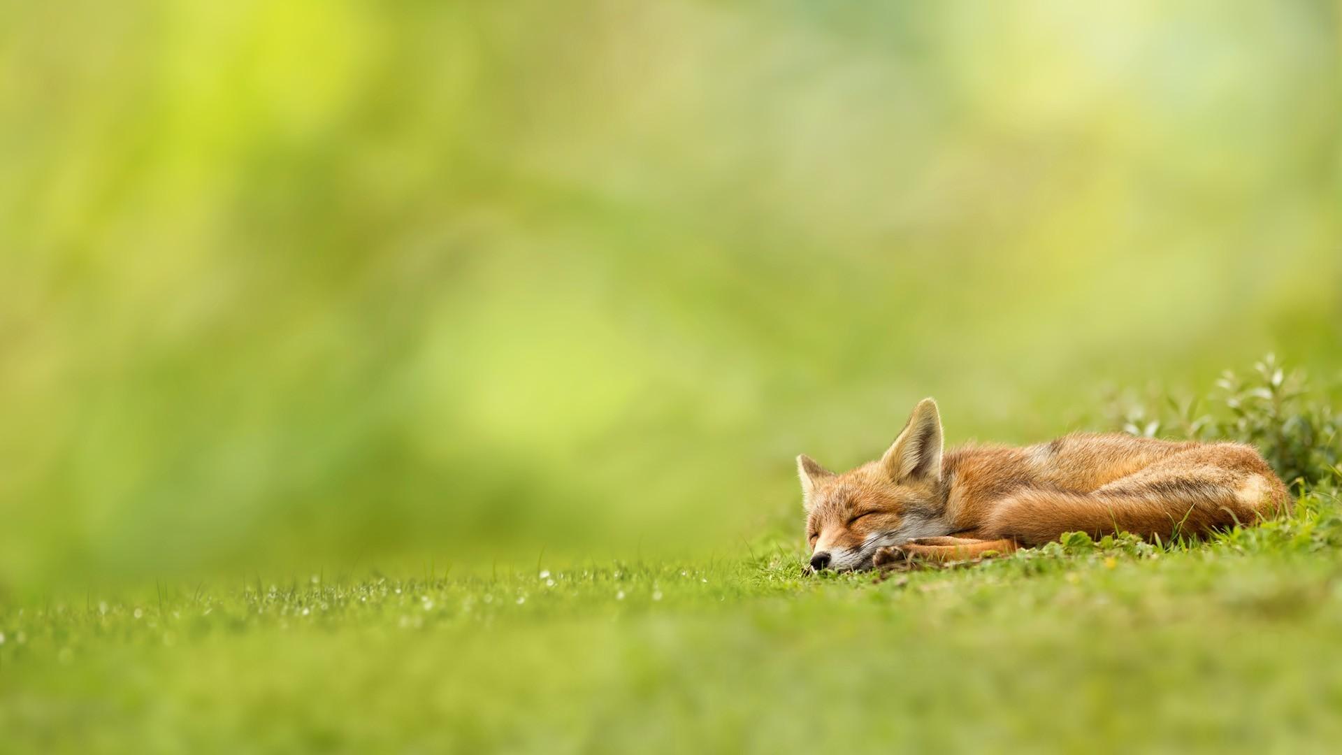 Зверек в траве без смс