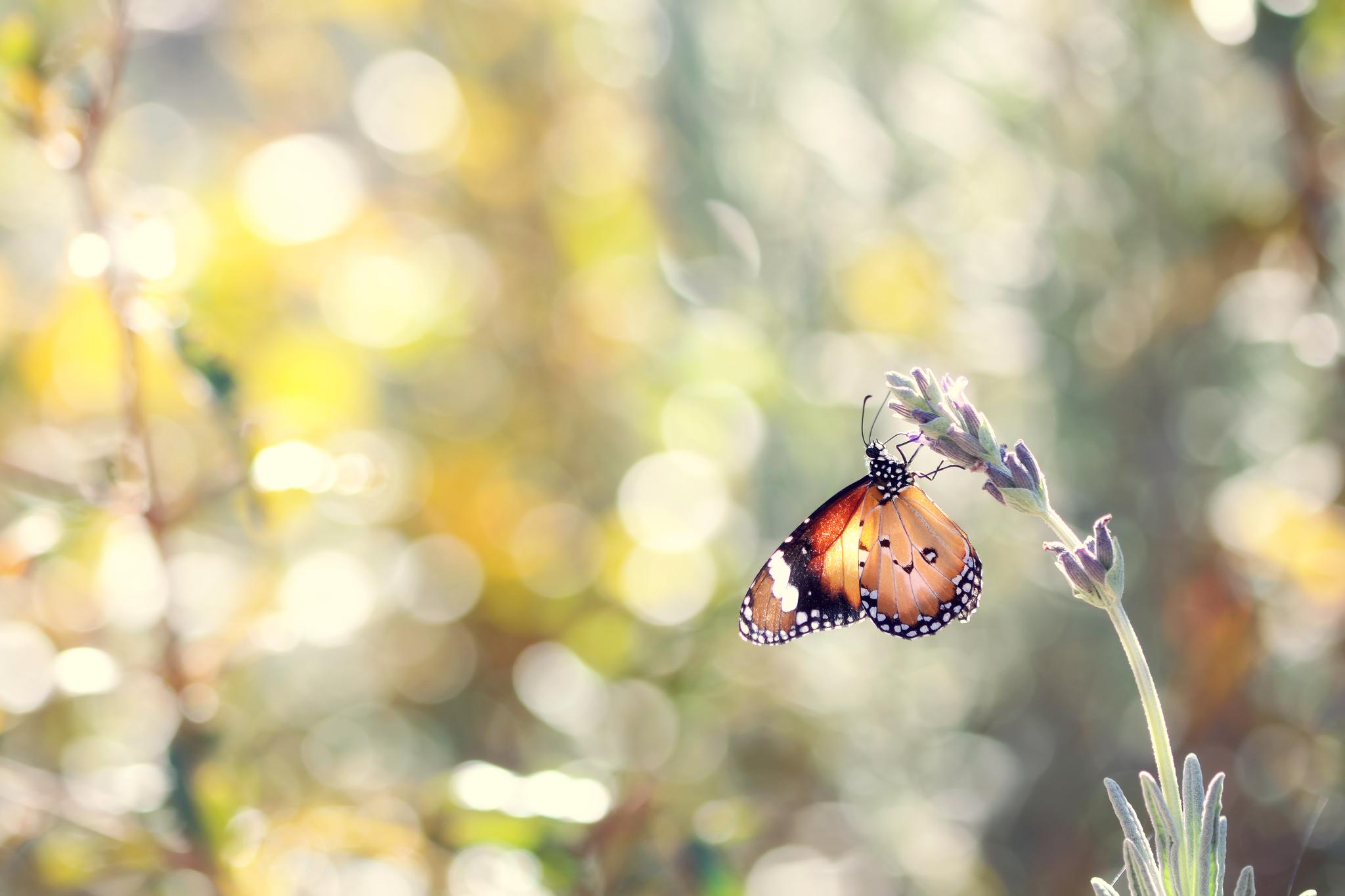 природа животные бабочка цветы без смс