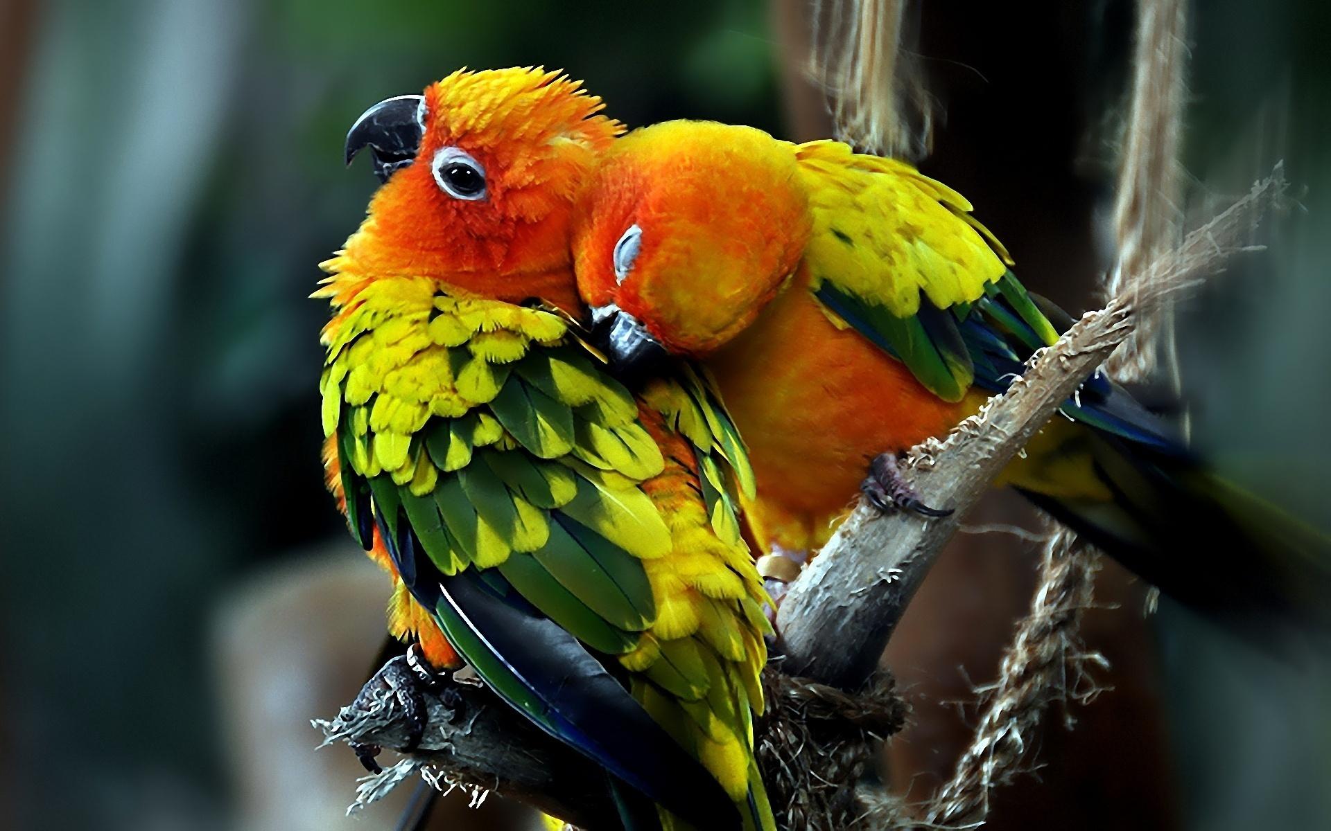 попугай макро деревья  № 737570 без смс