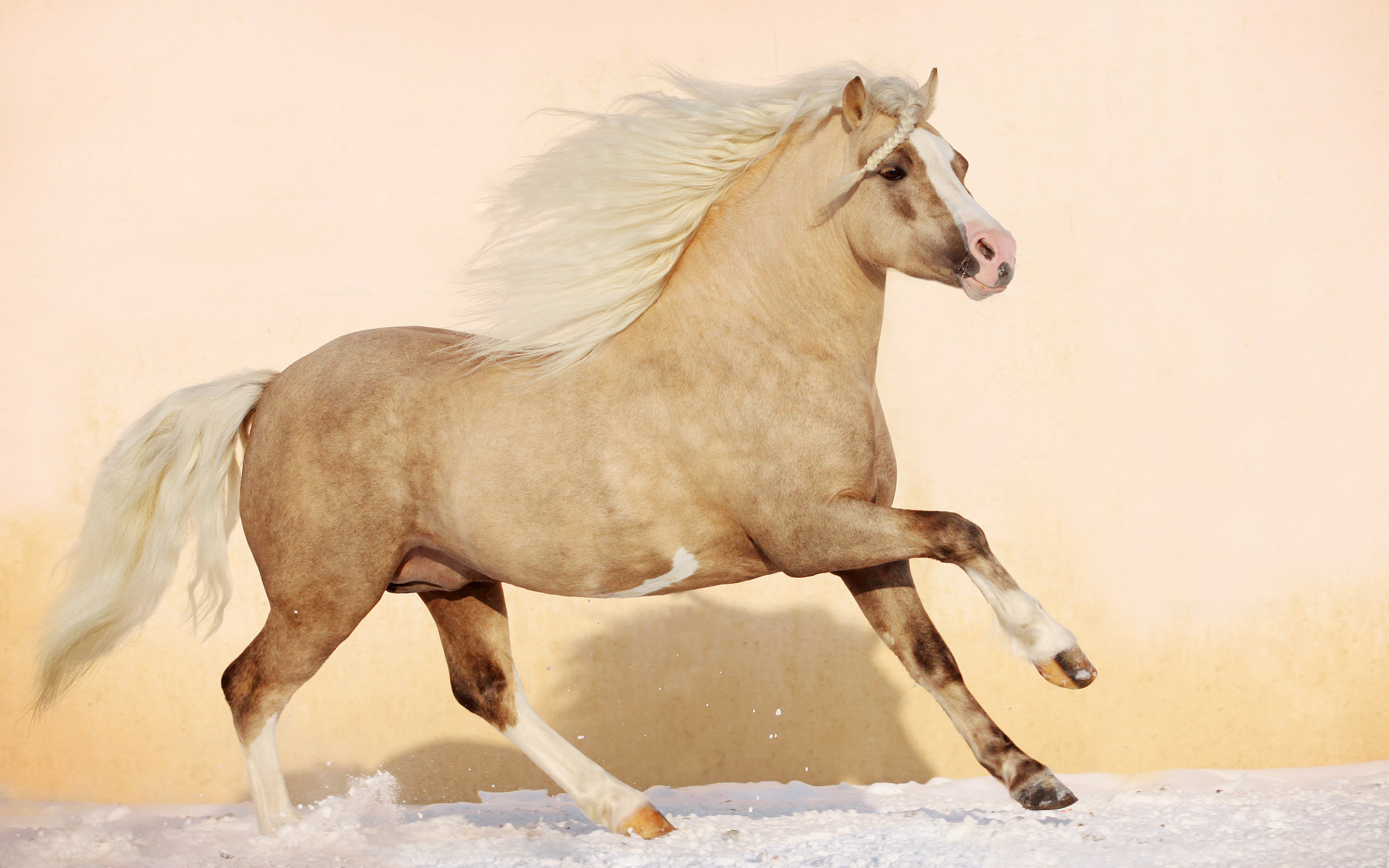 лошадь с гривой  № 3127135 бесплатно