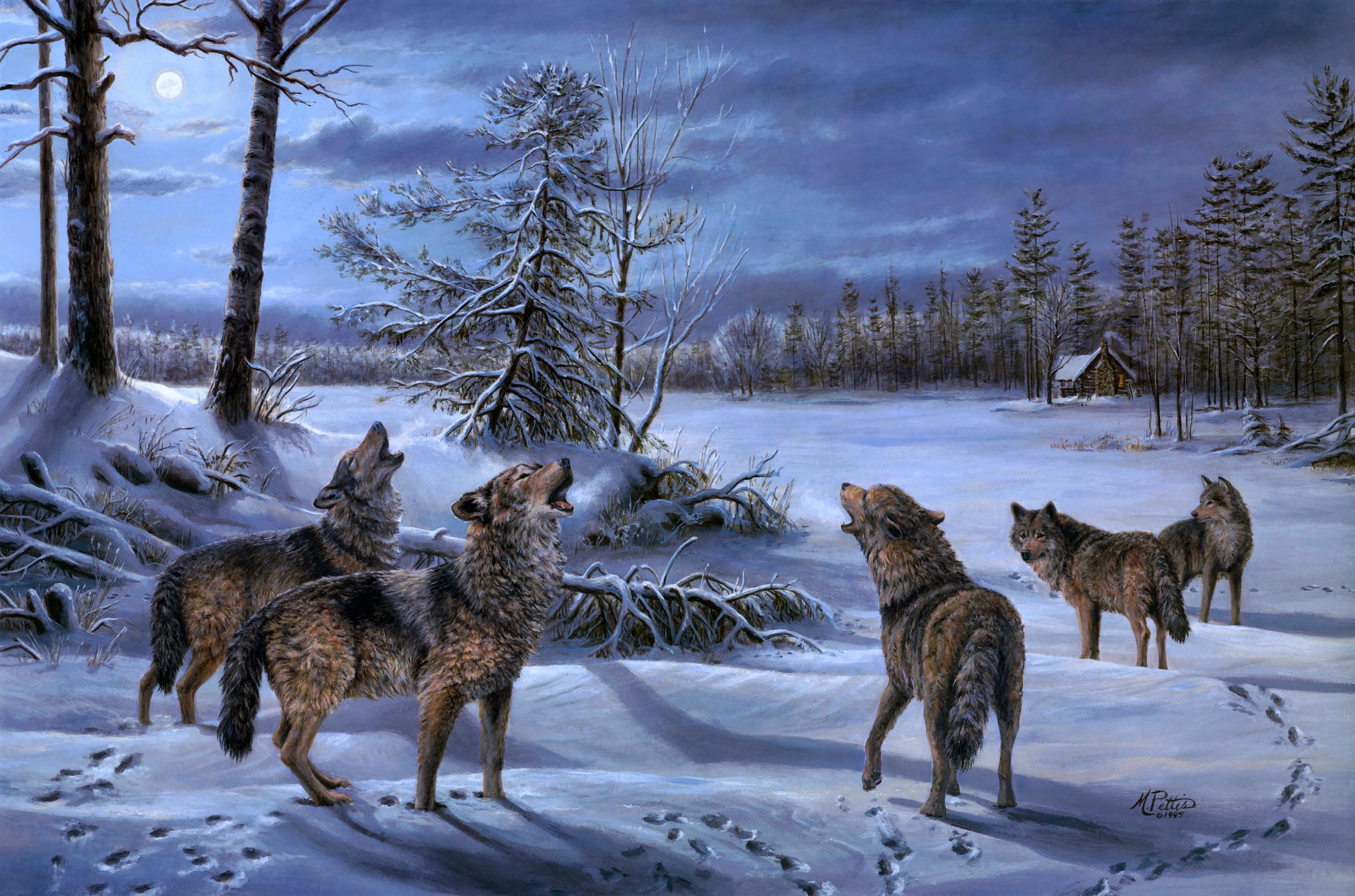 Волк в кустах без смс