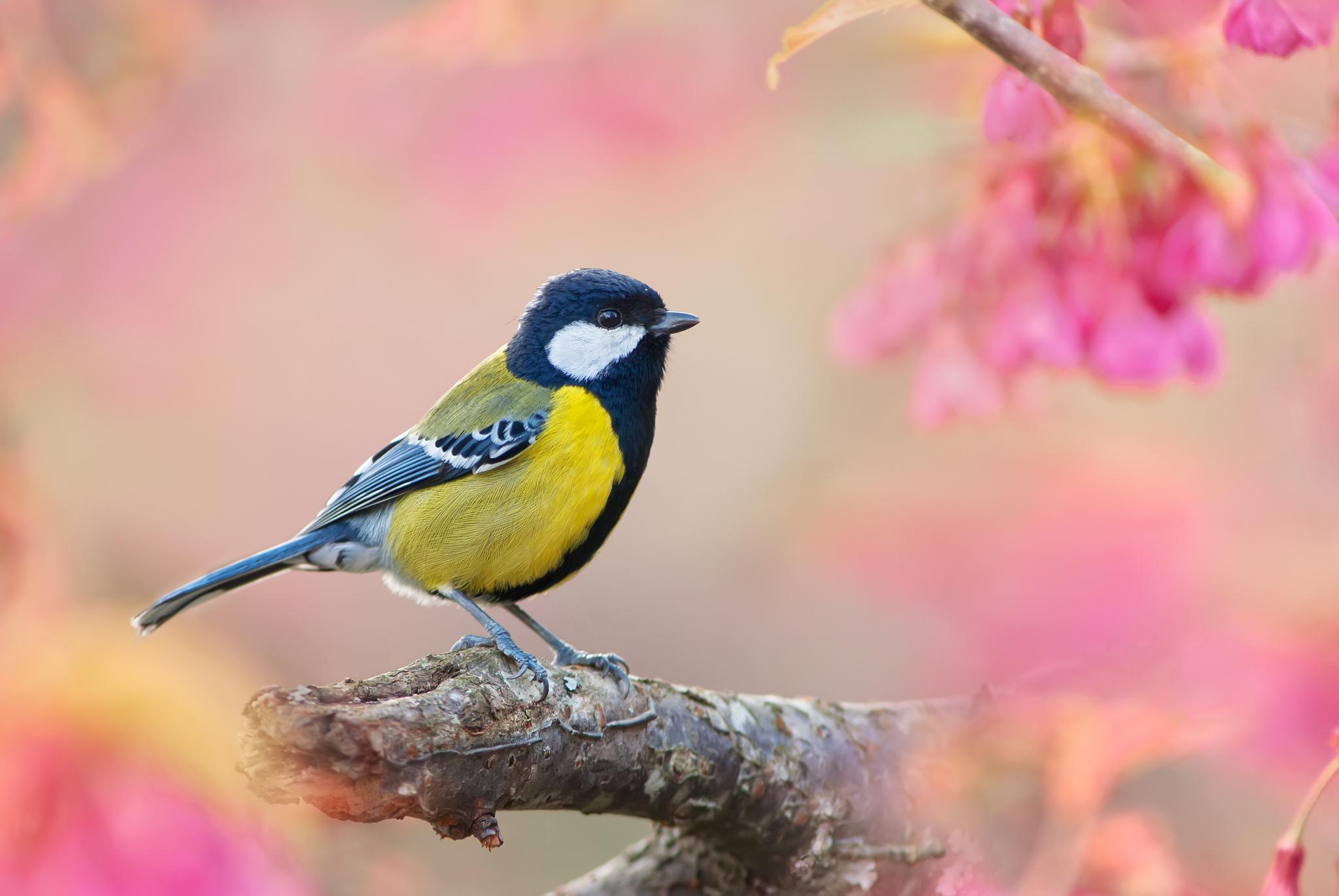 Птицы на ветке  № 1652626 загрузить