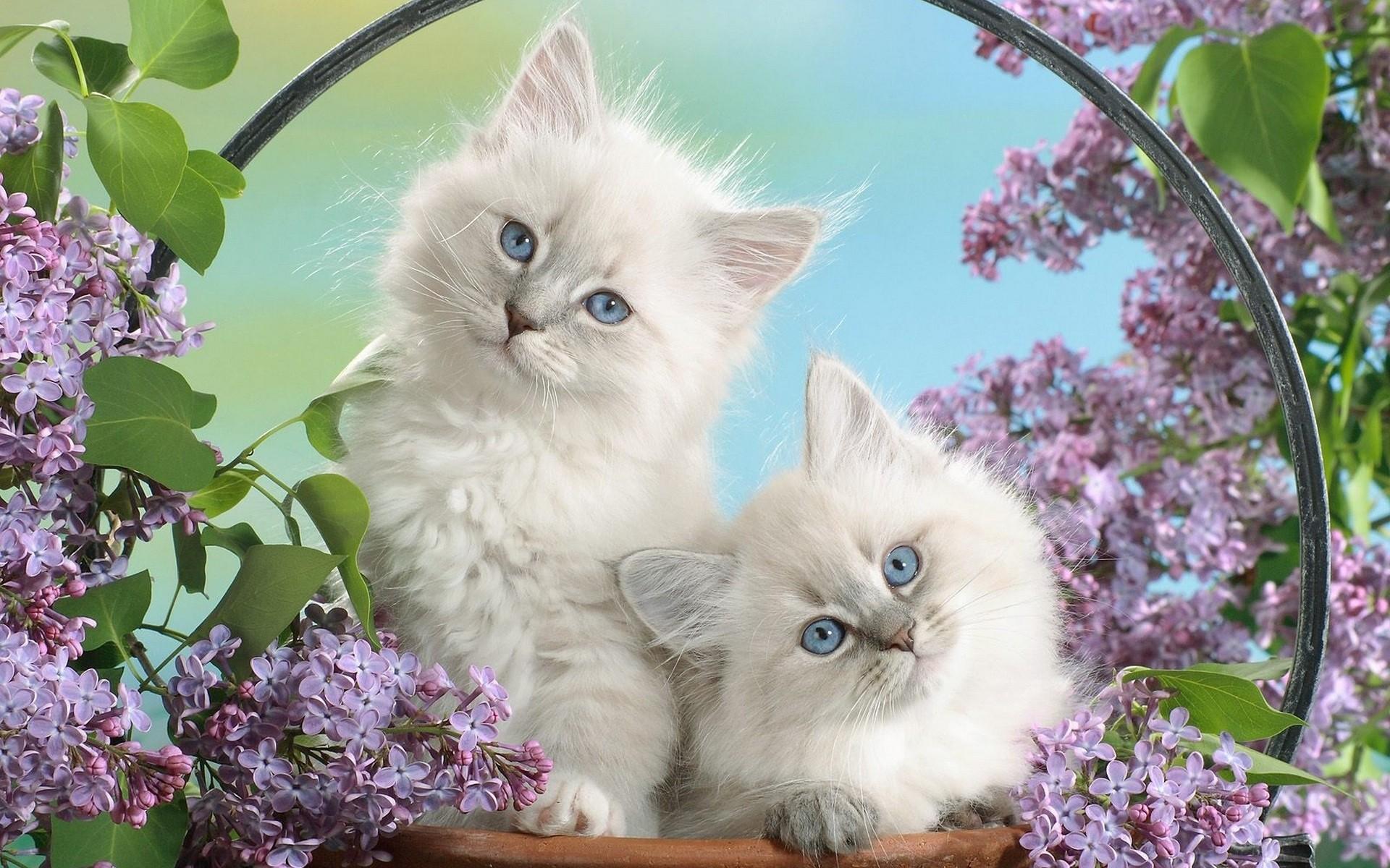 белый кот животное природа бесплатно
