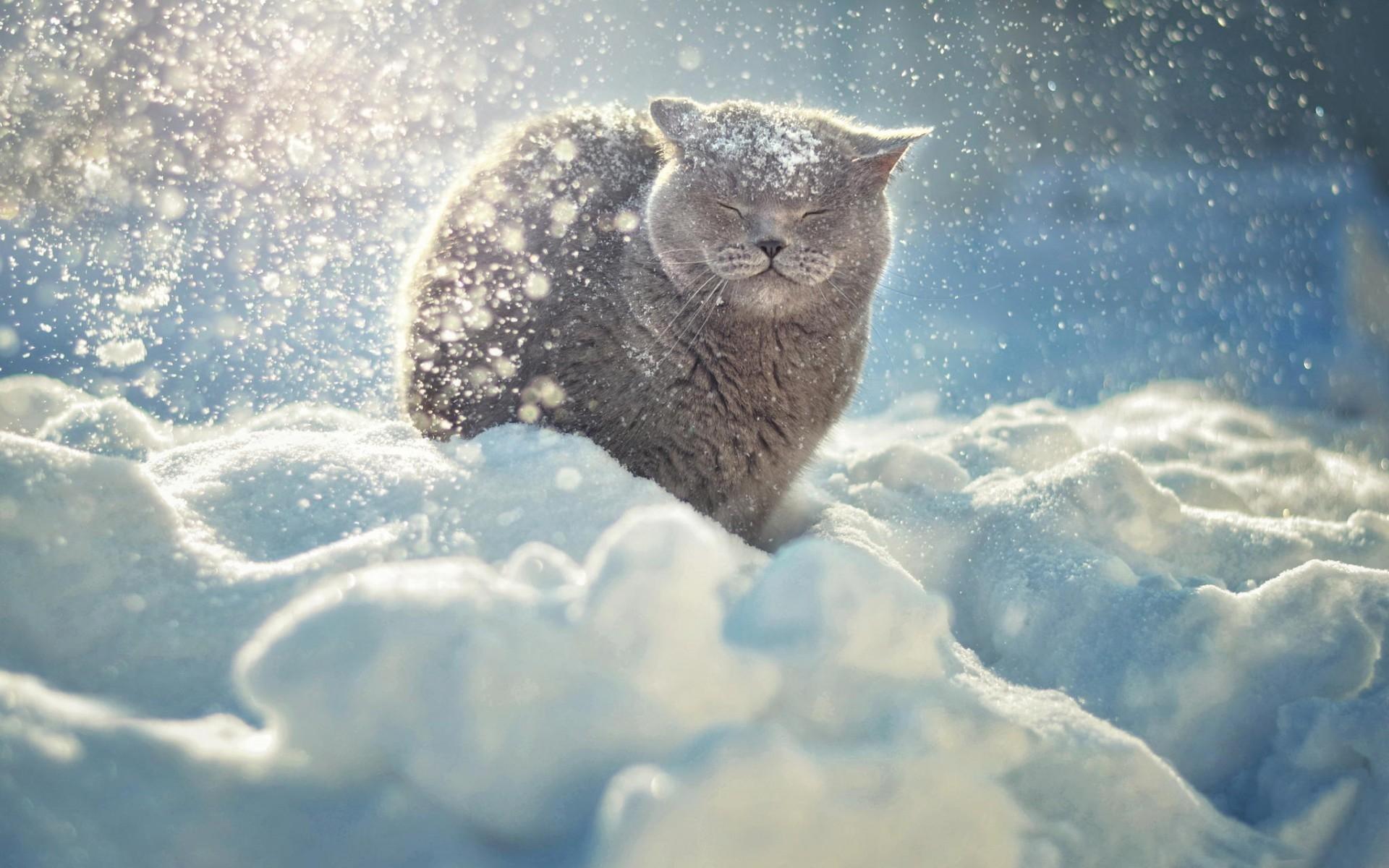 Кот на снегу без смс