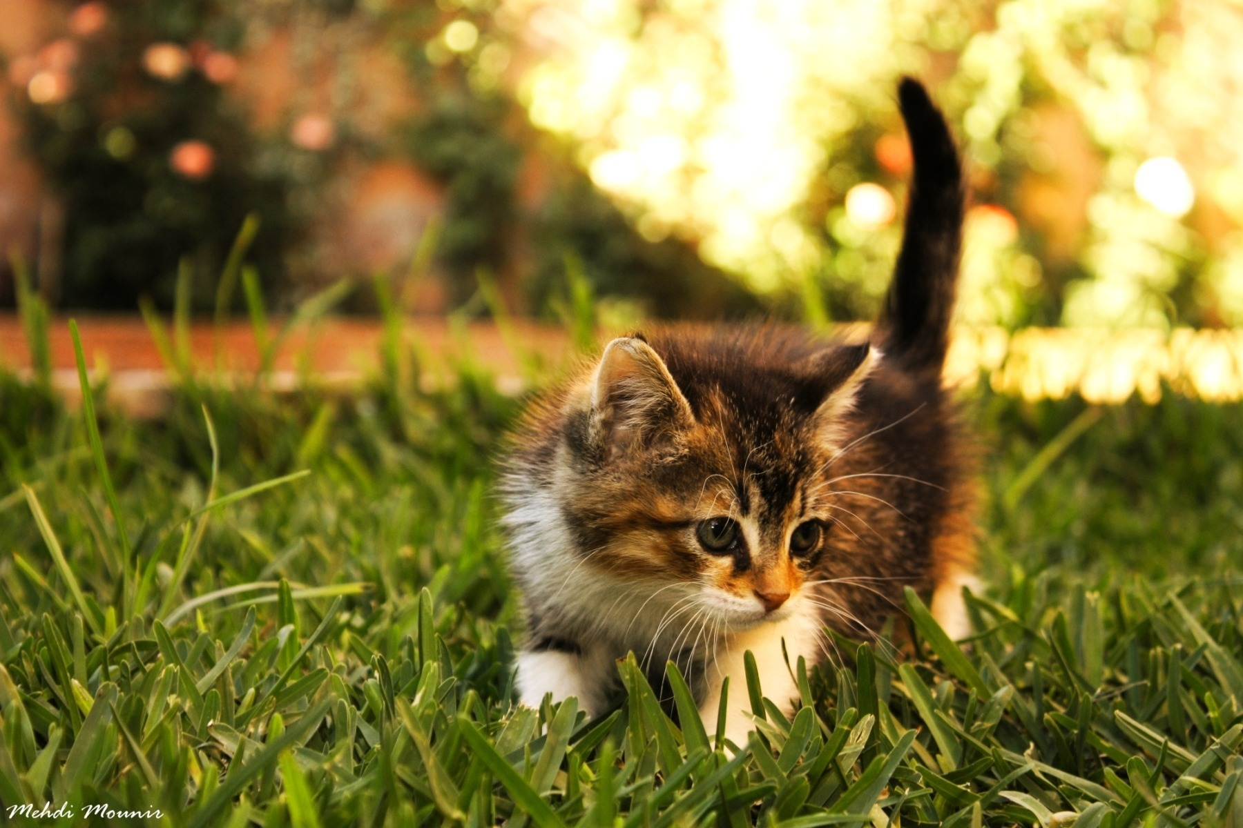 Котенок играющий с кошкой в траве  № 1994926 бесплатно