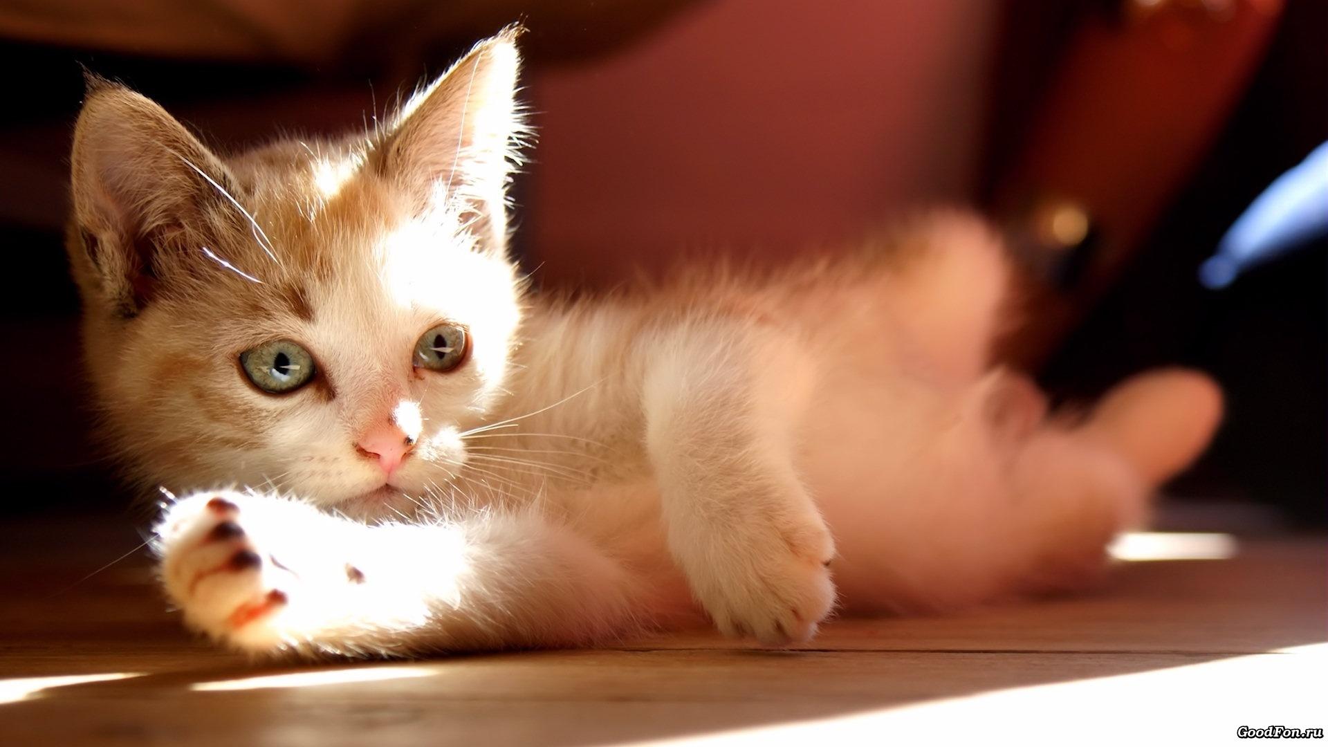 Котенок животное играется бесплатно