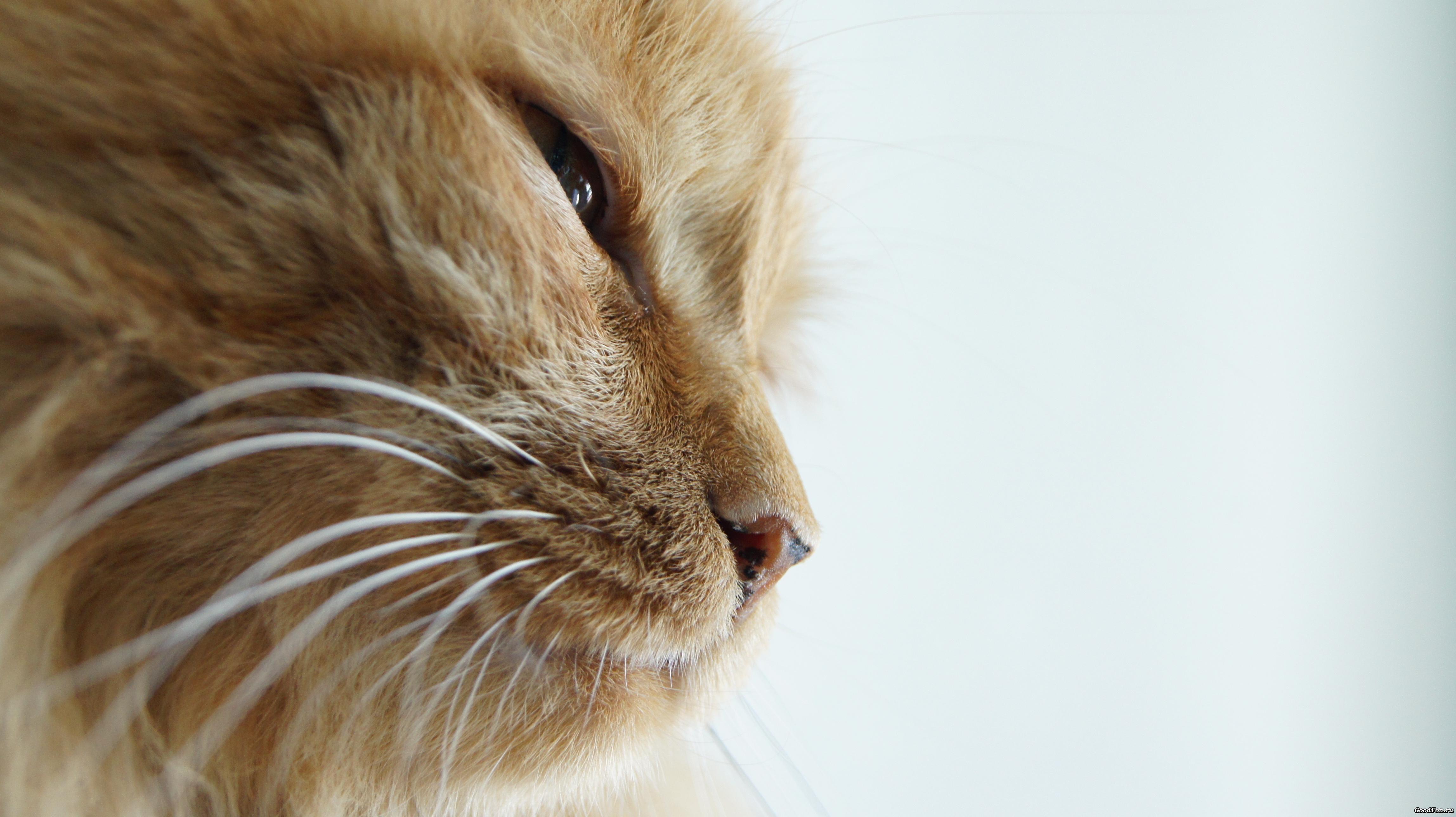 кошка домик усы бесплатно