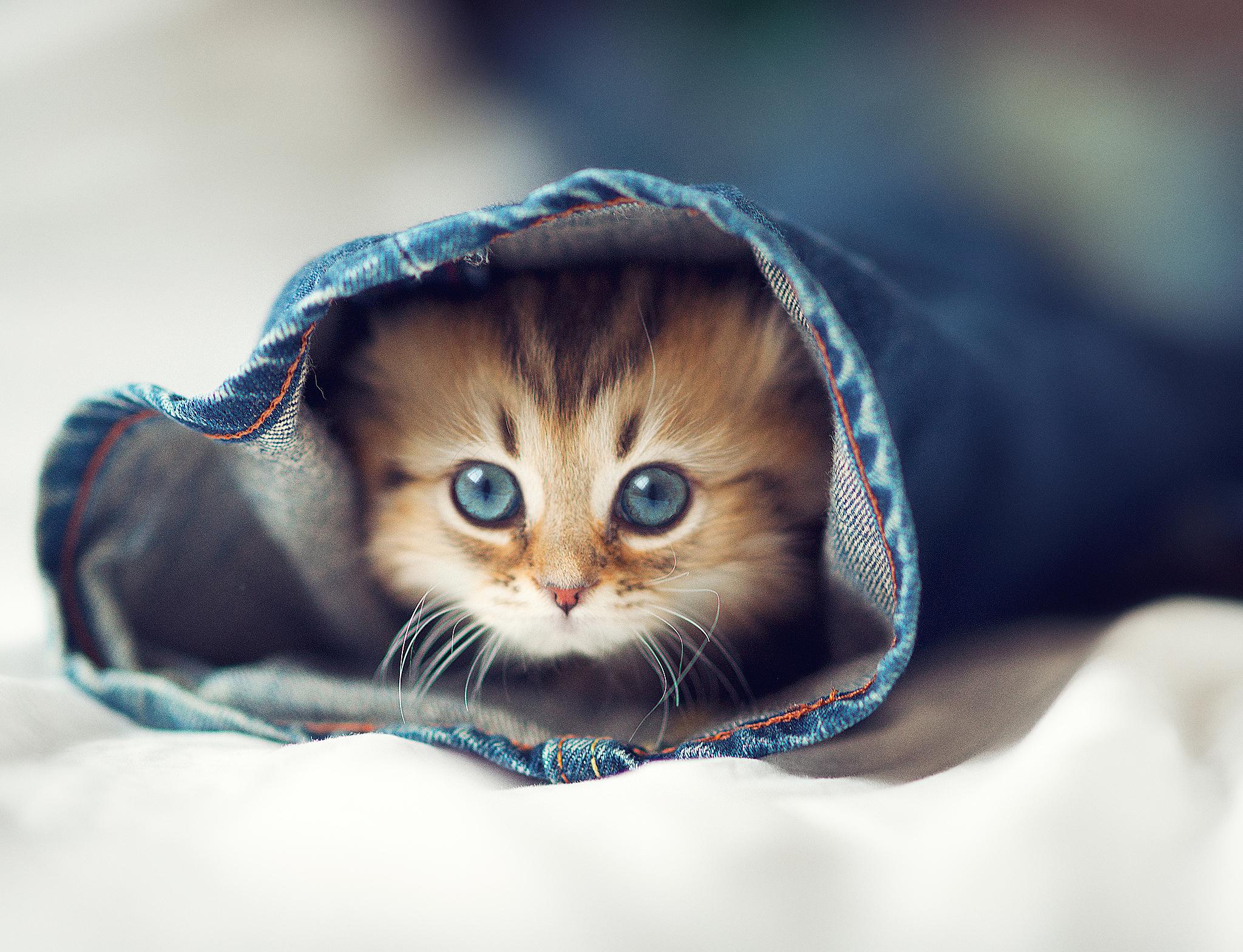 Top 5 cat secrets