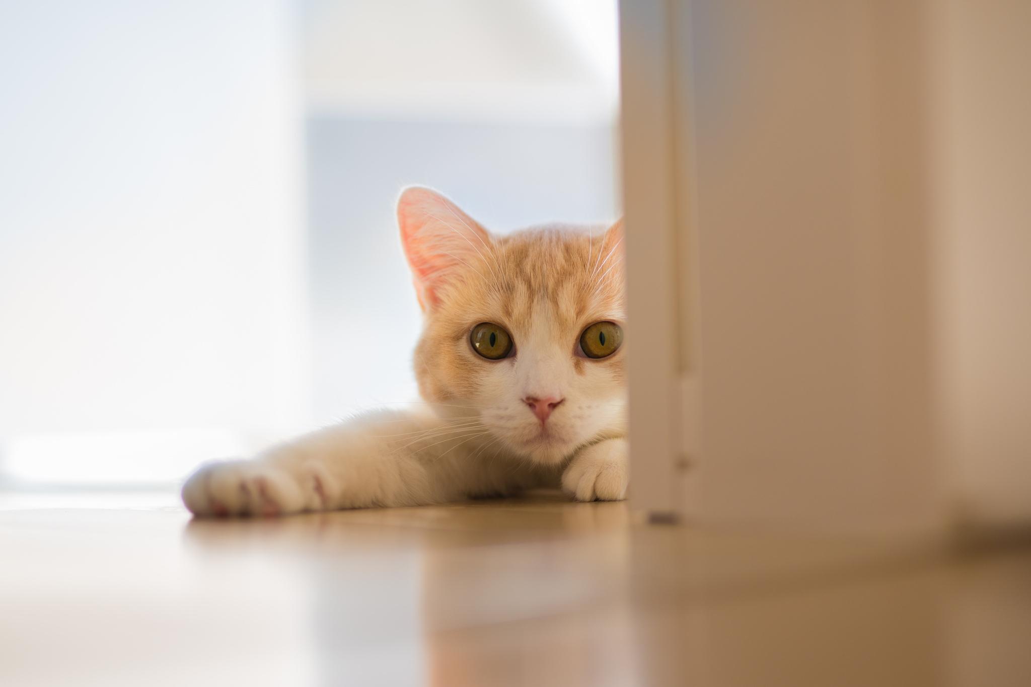 упитанный кот лапки  № 2866466  скачать