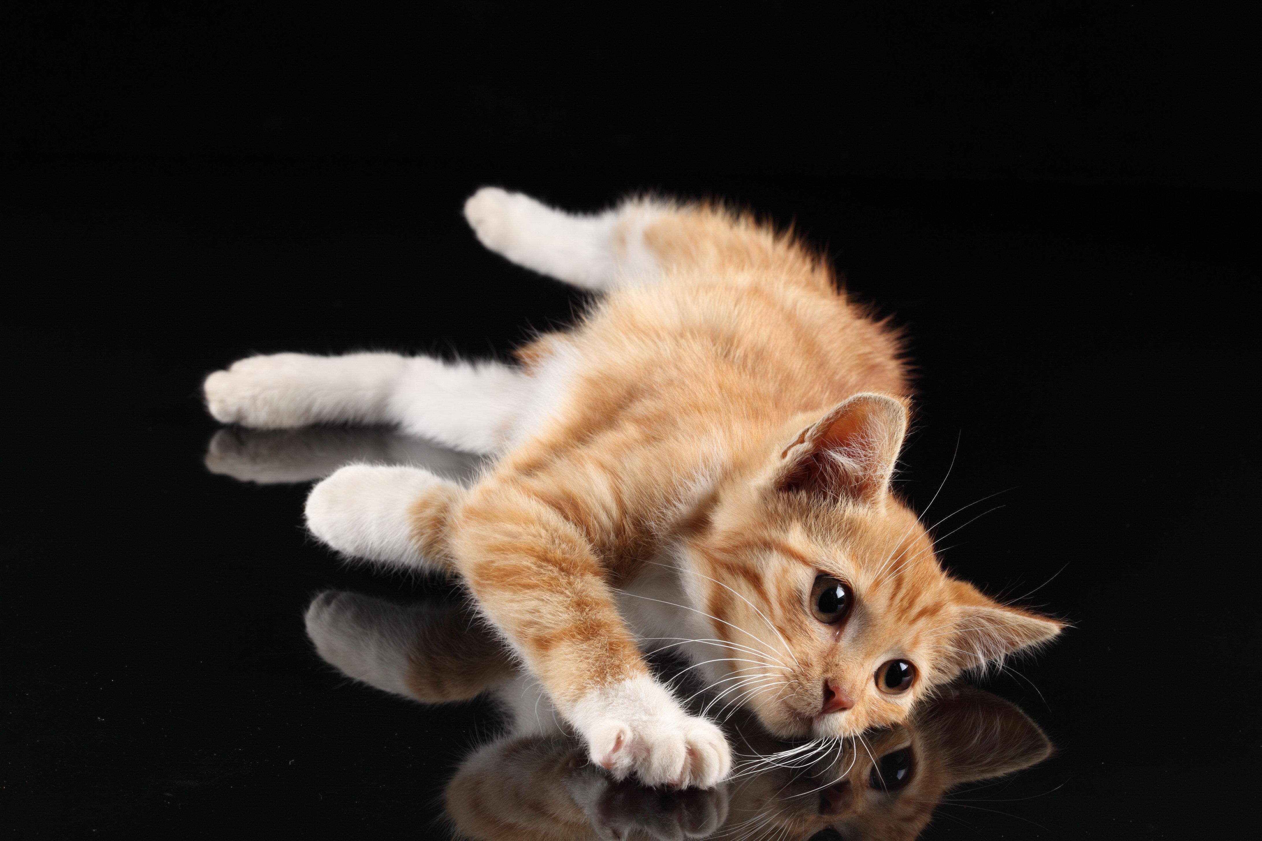 затылок котенка бесплатно