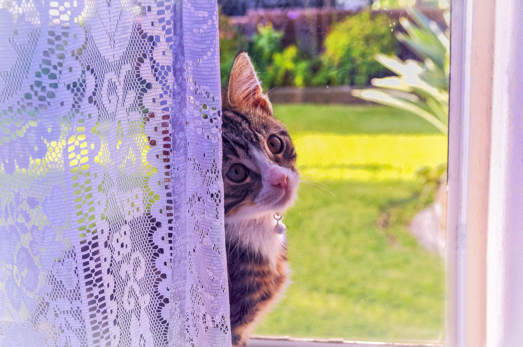 котята на окне kittens on the window  № 3063250 бесплатно