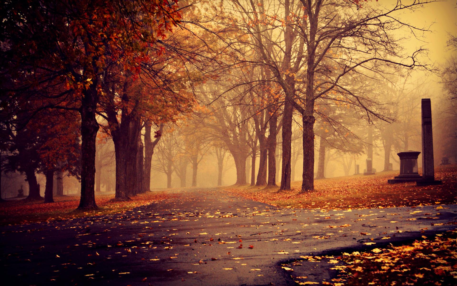 пара закат парк осень бесплатно