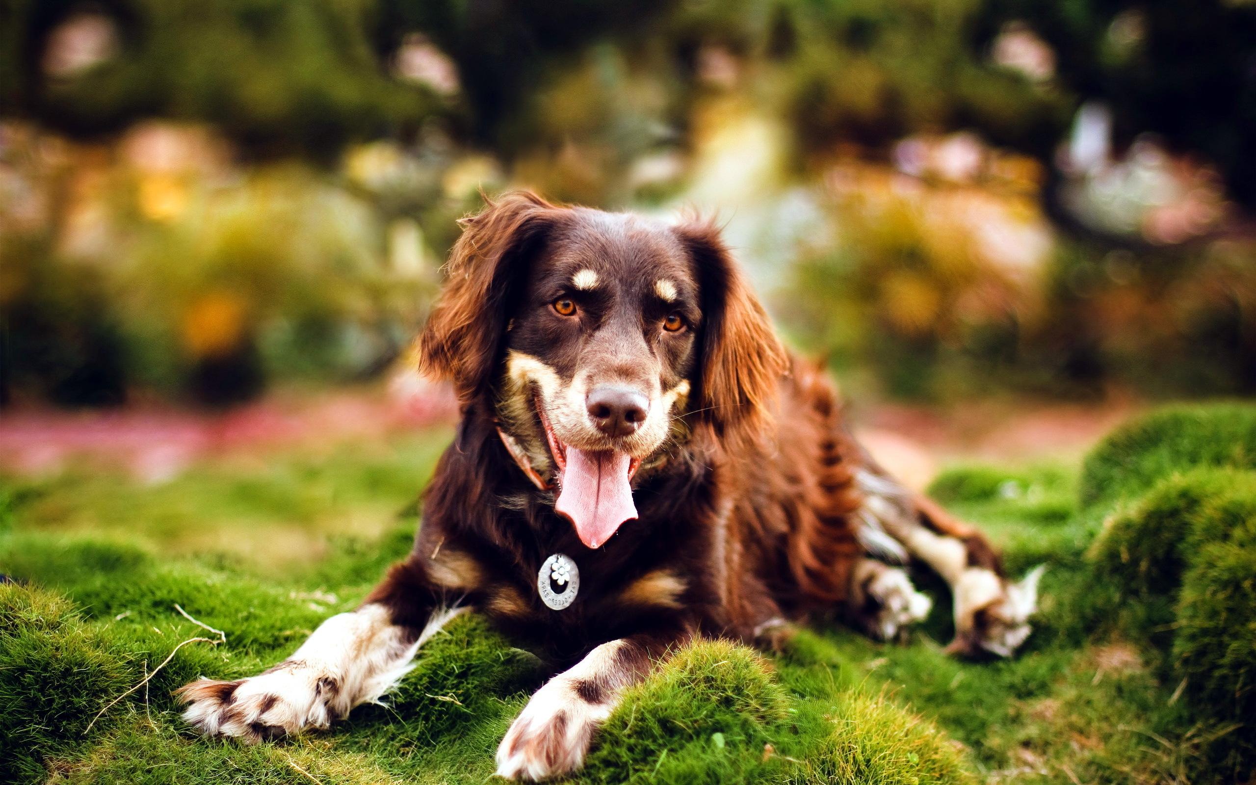 собака животное природа  № 690812  скачать