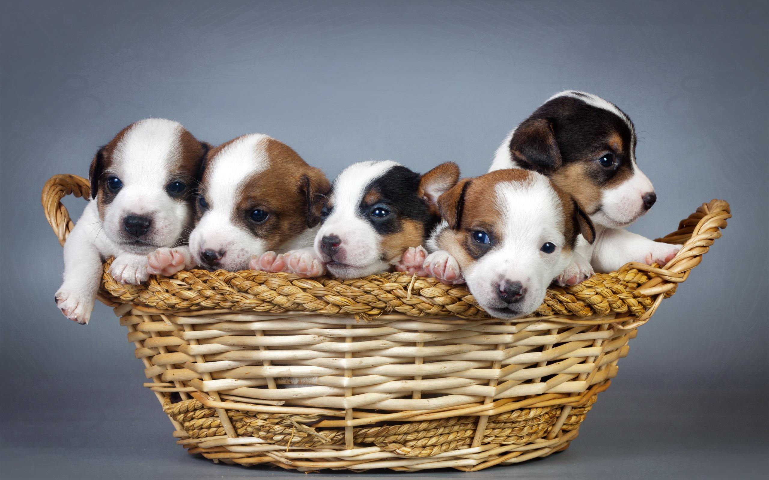 щенок корзина puppy basket бесплатно