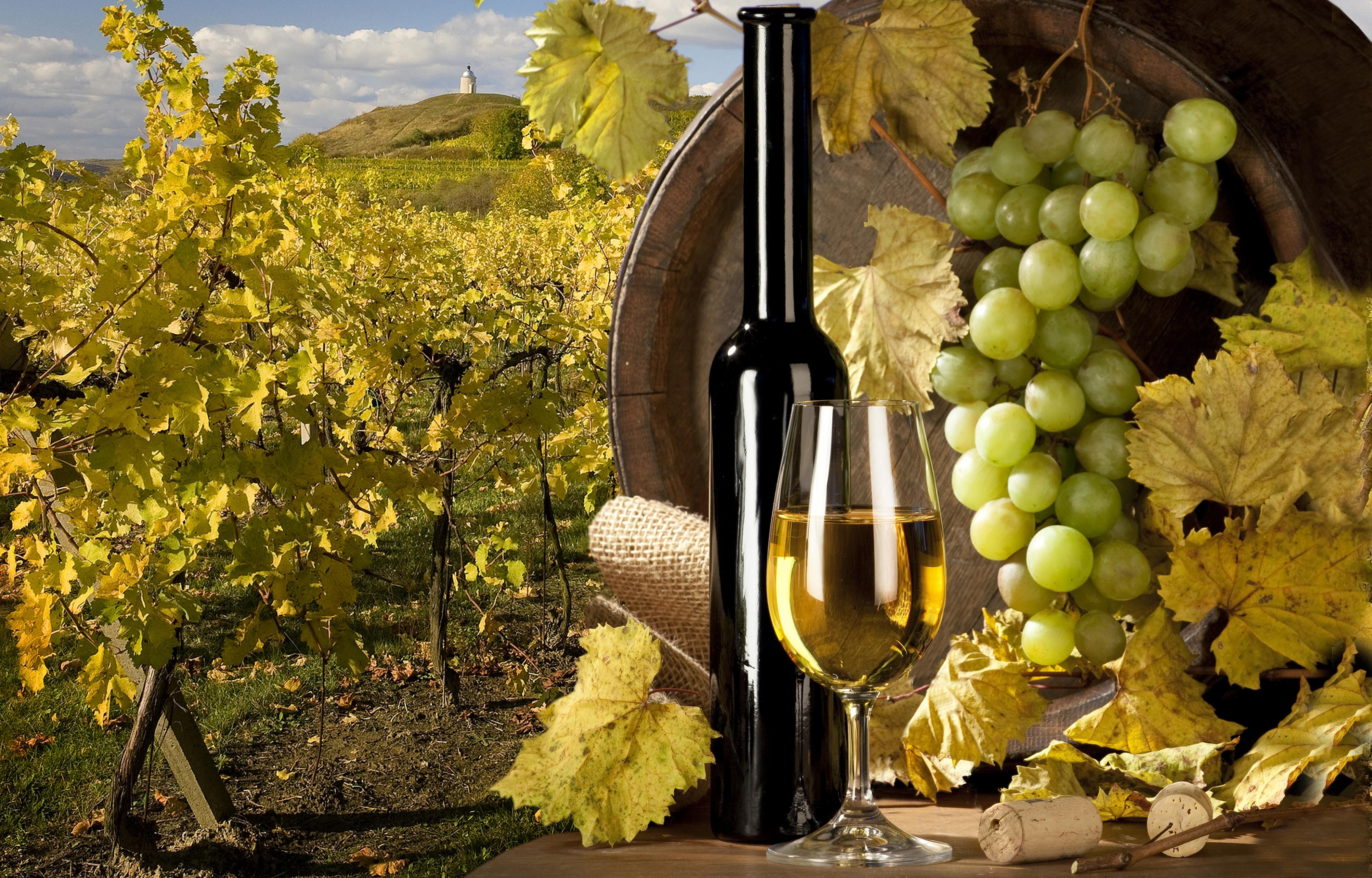 еда вино  № 598721  скачать