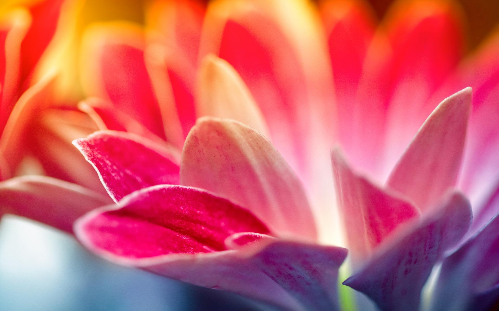 природа красный цветок макро скачать