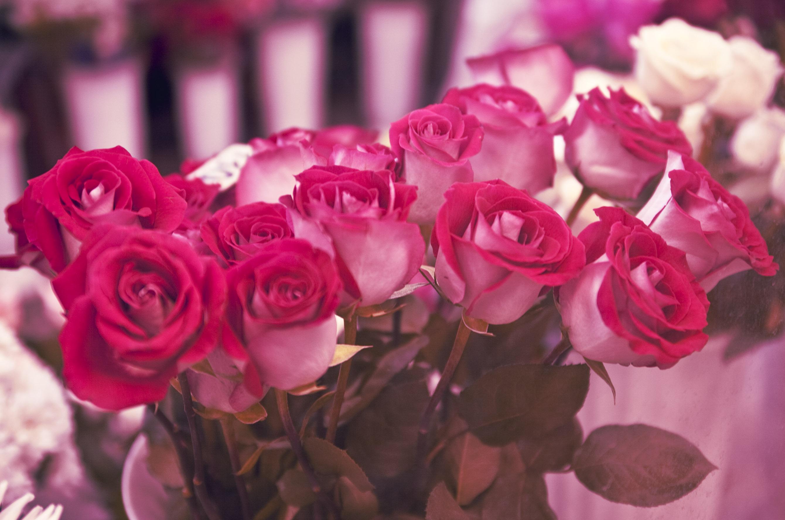 обои на рабочий стол самые красивые розы для тебя № 164851 бесплатно