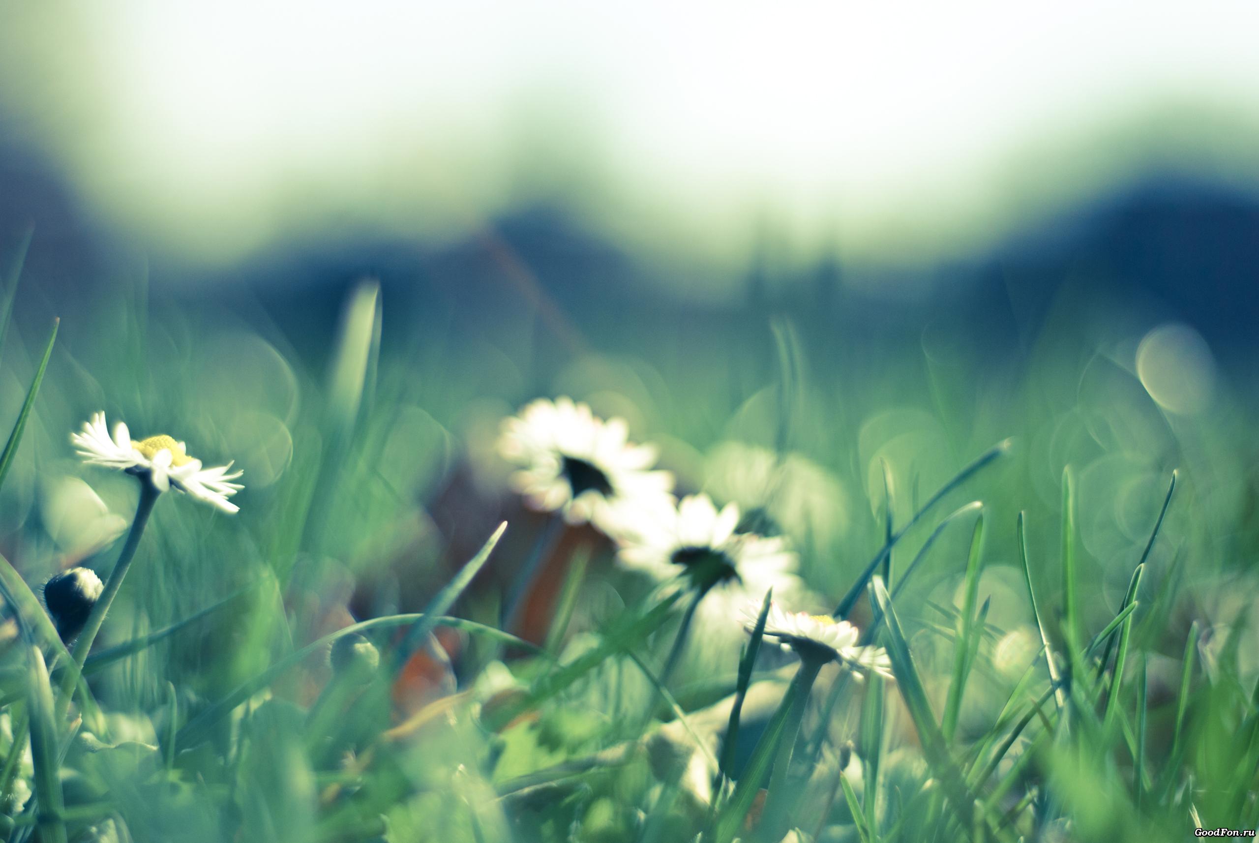 цветы трава поляна без смс