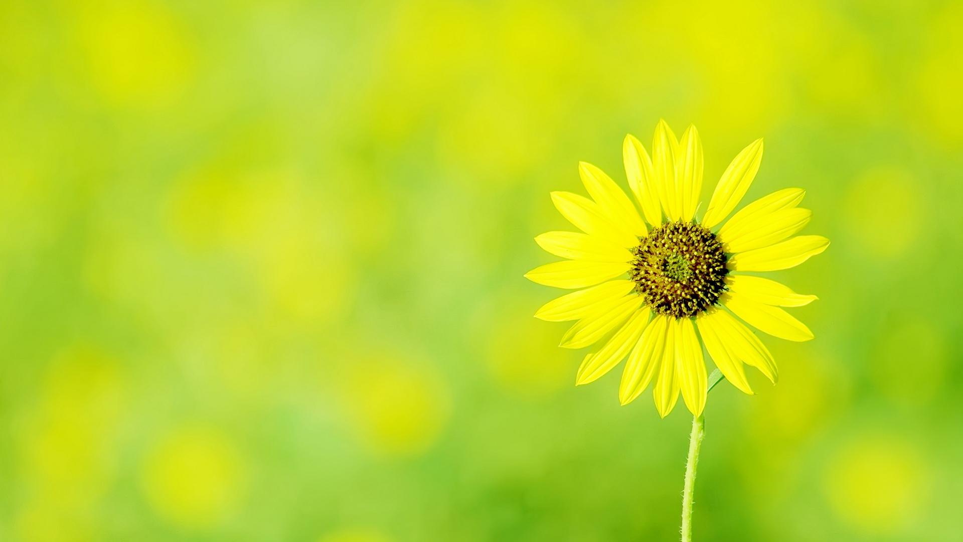 Желтый цветок в зеленой траве в хорошем качестве