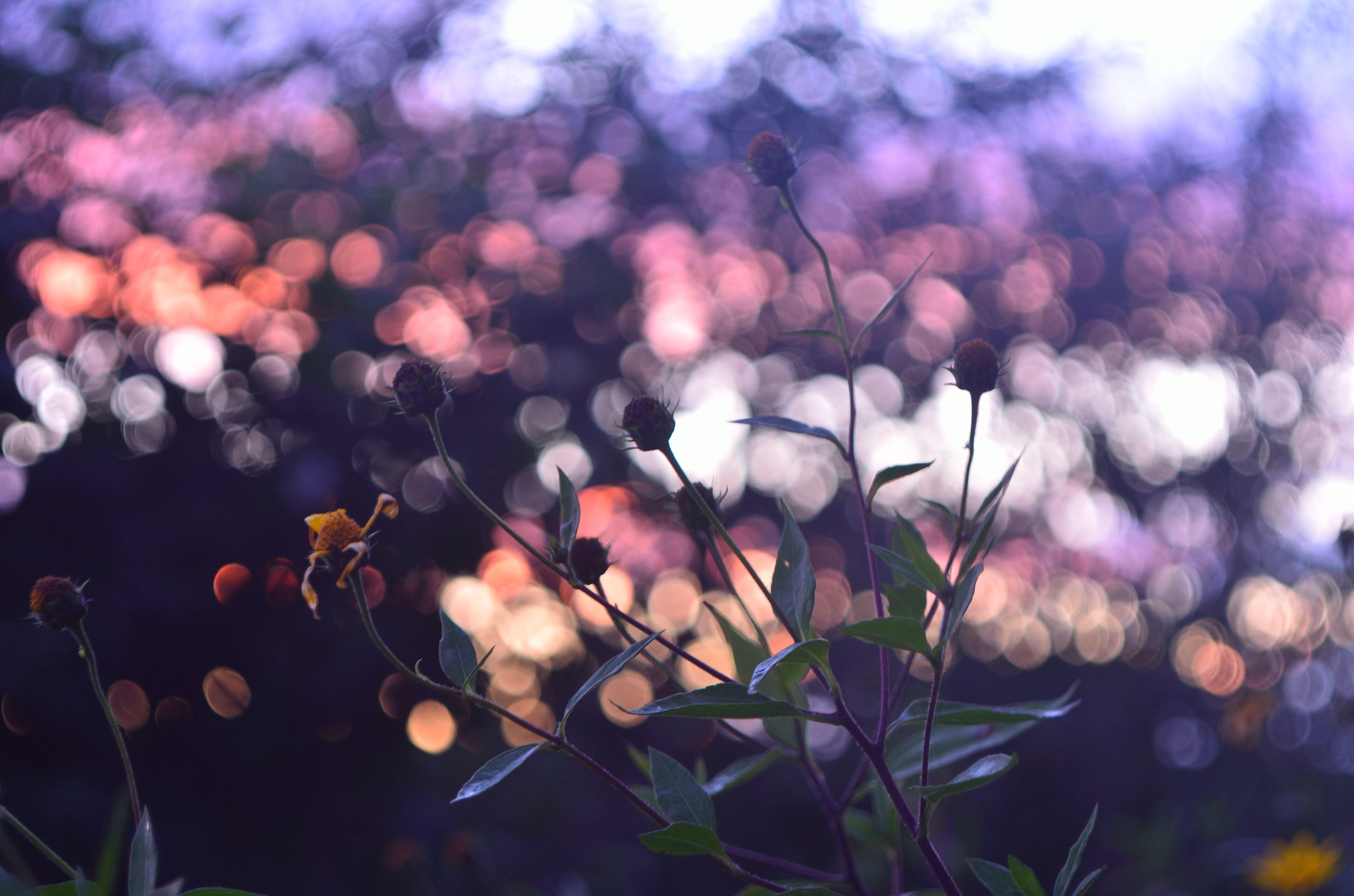 цветы на закате бесплатно