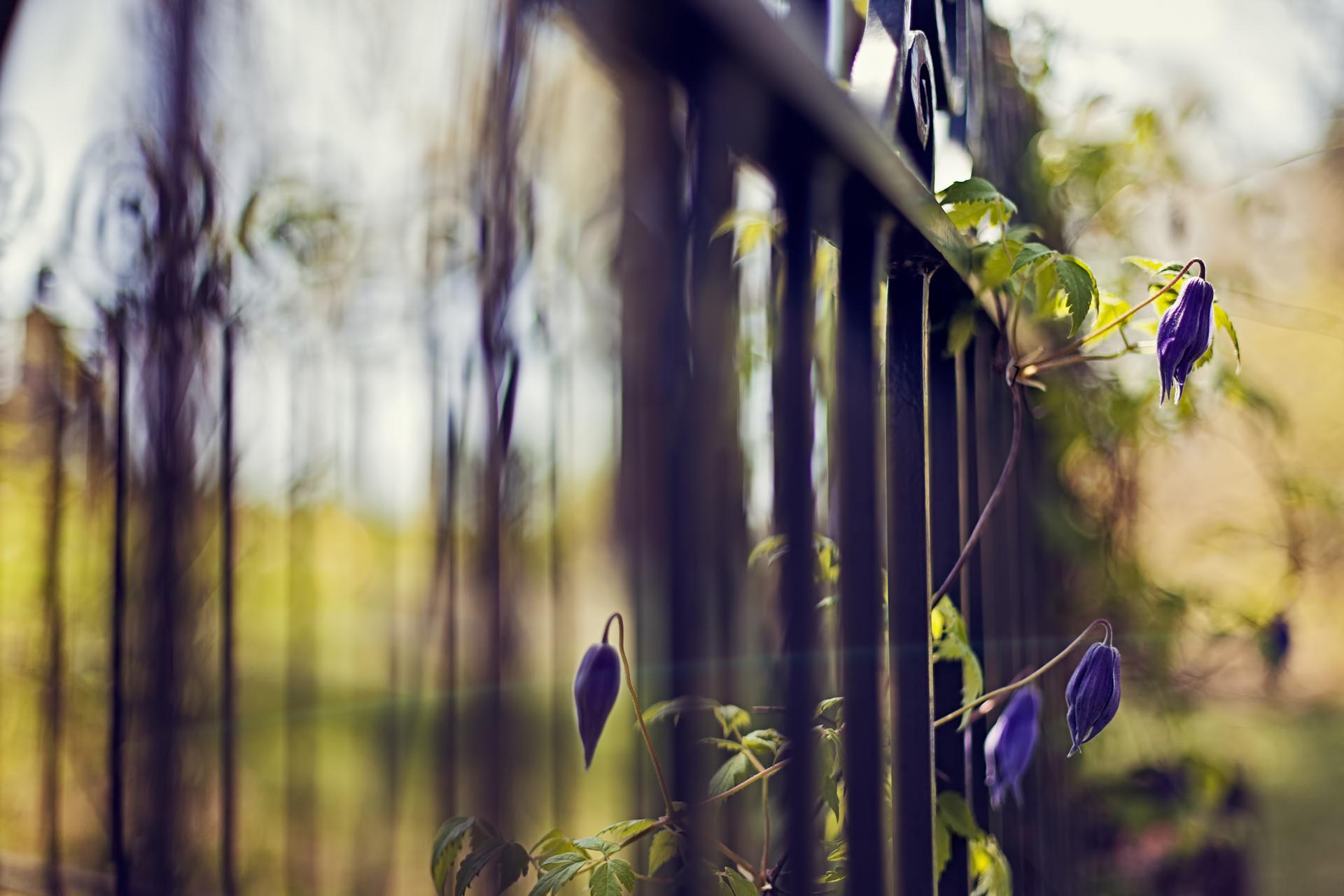 Желтые цветы под забором загрузить