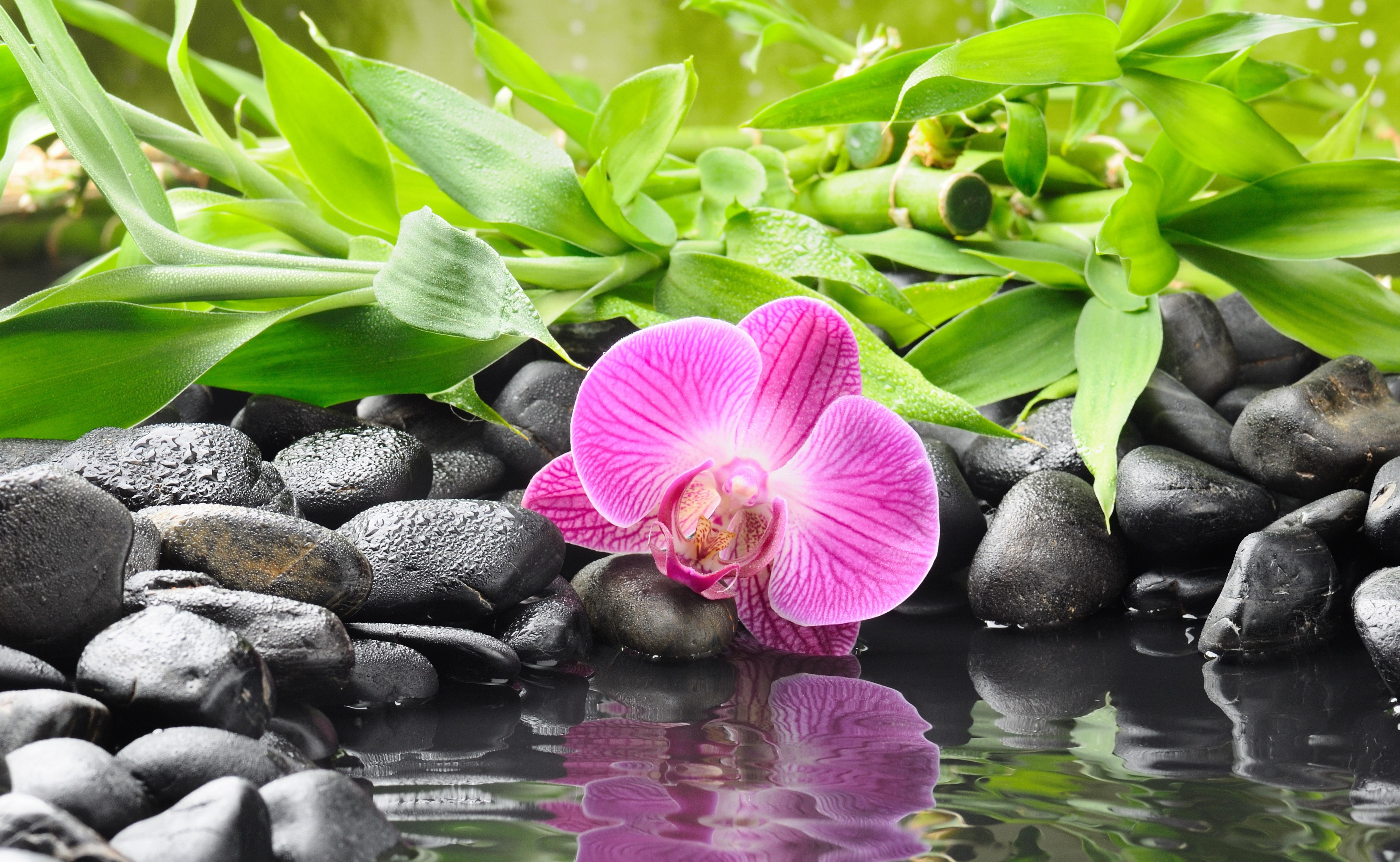 Камни черные цветок  № 2989366 загрузить