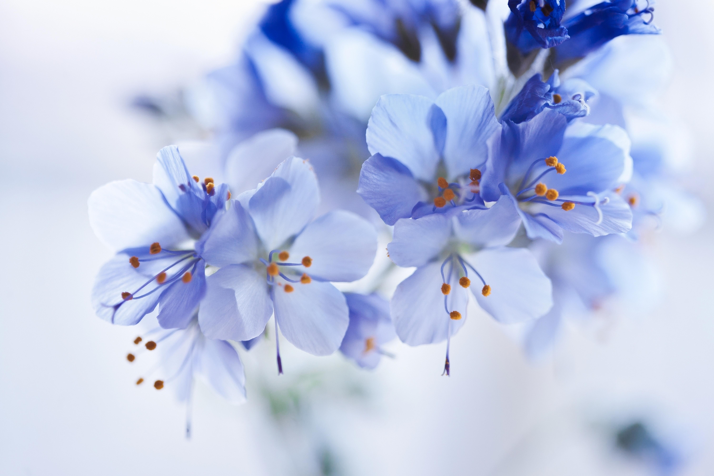 Белые и синие цветки без смс