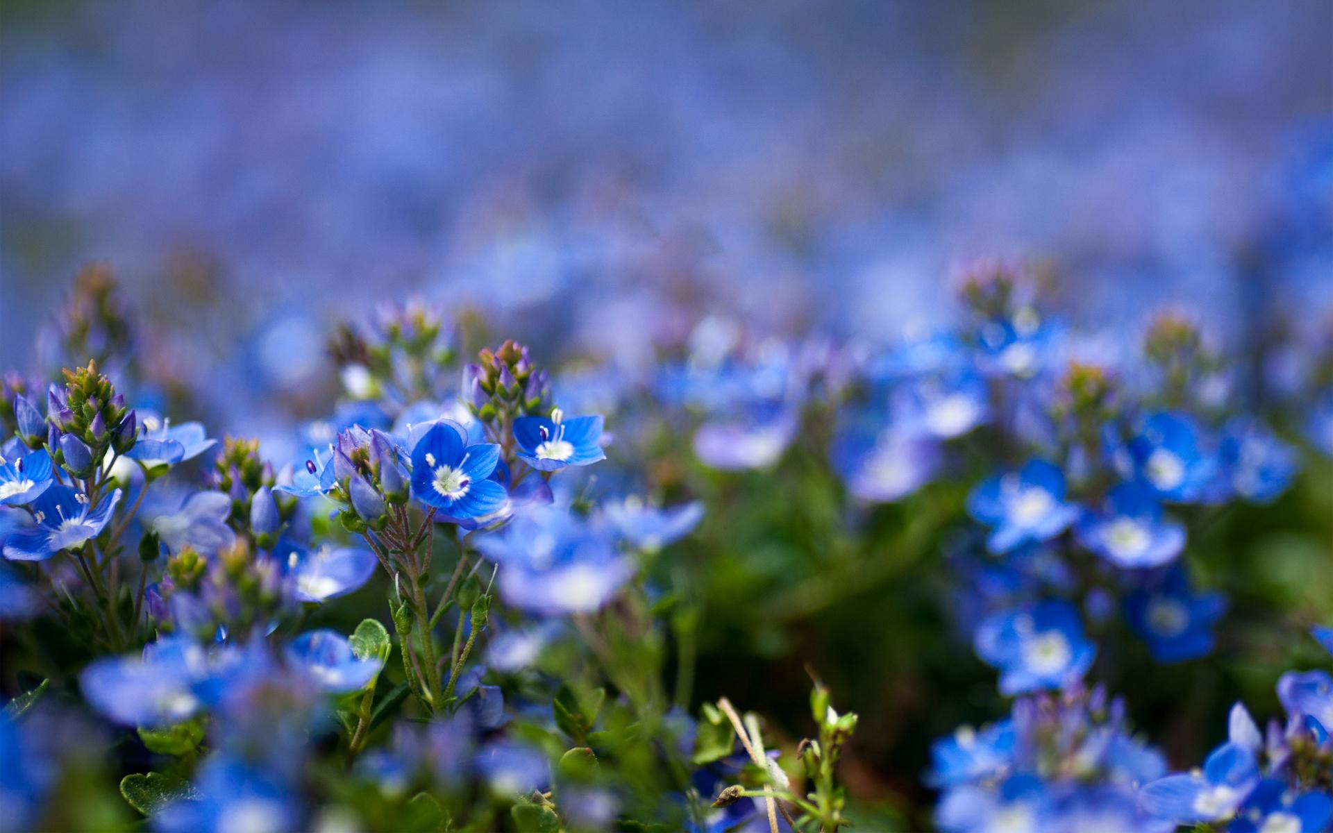 Полевые цветочки бесплатно