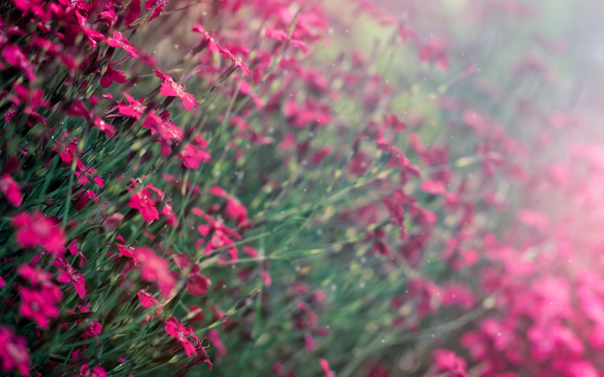 природа цветы фиолетовые трава nature flowers purple grass загрузить