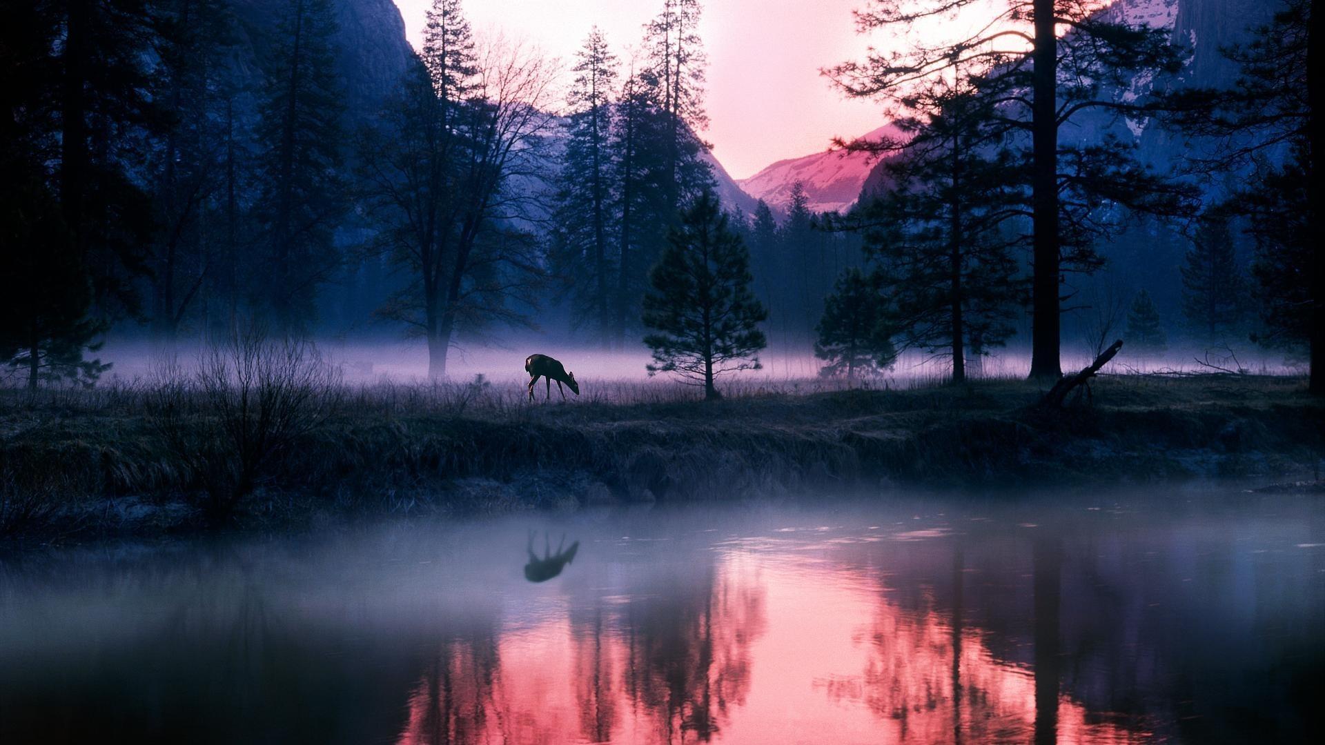 озеро в лесу на закате  № 380256 без смс