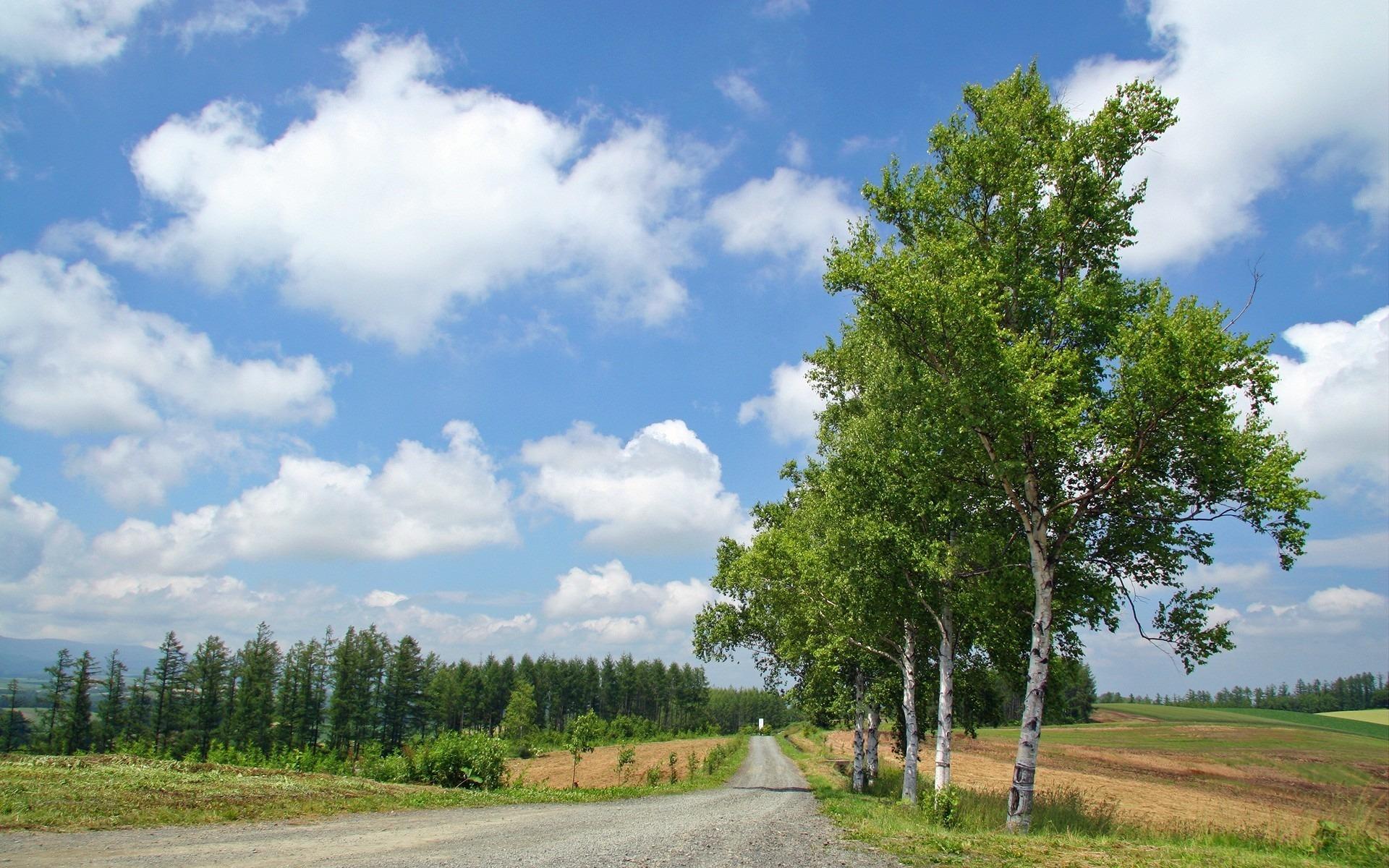 березы дорога зелень лето скачать