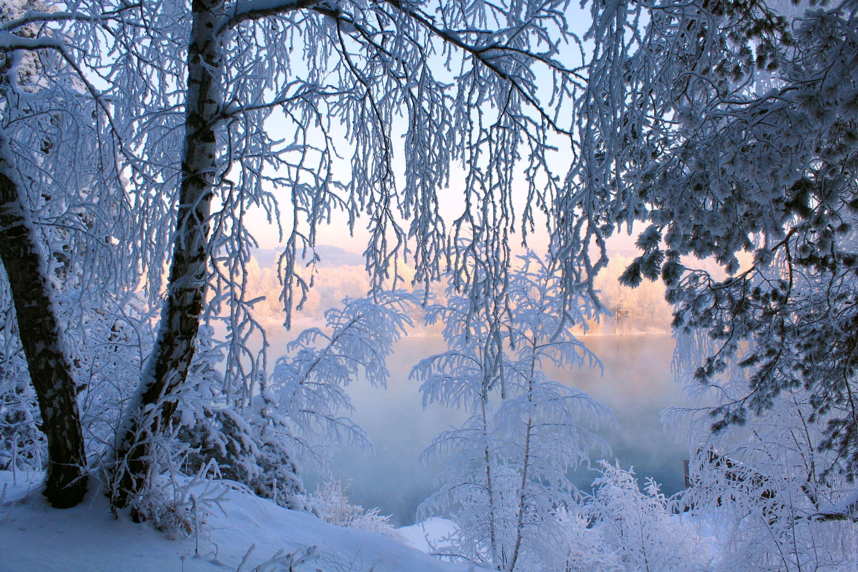 снег иней зима snow frost winter без смс