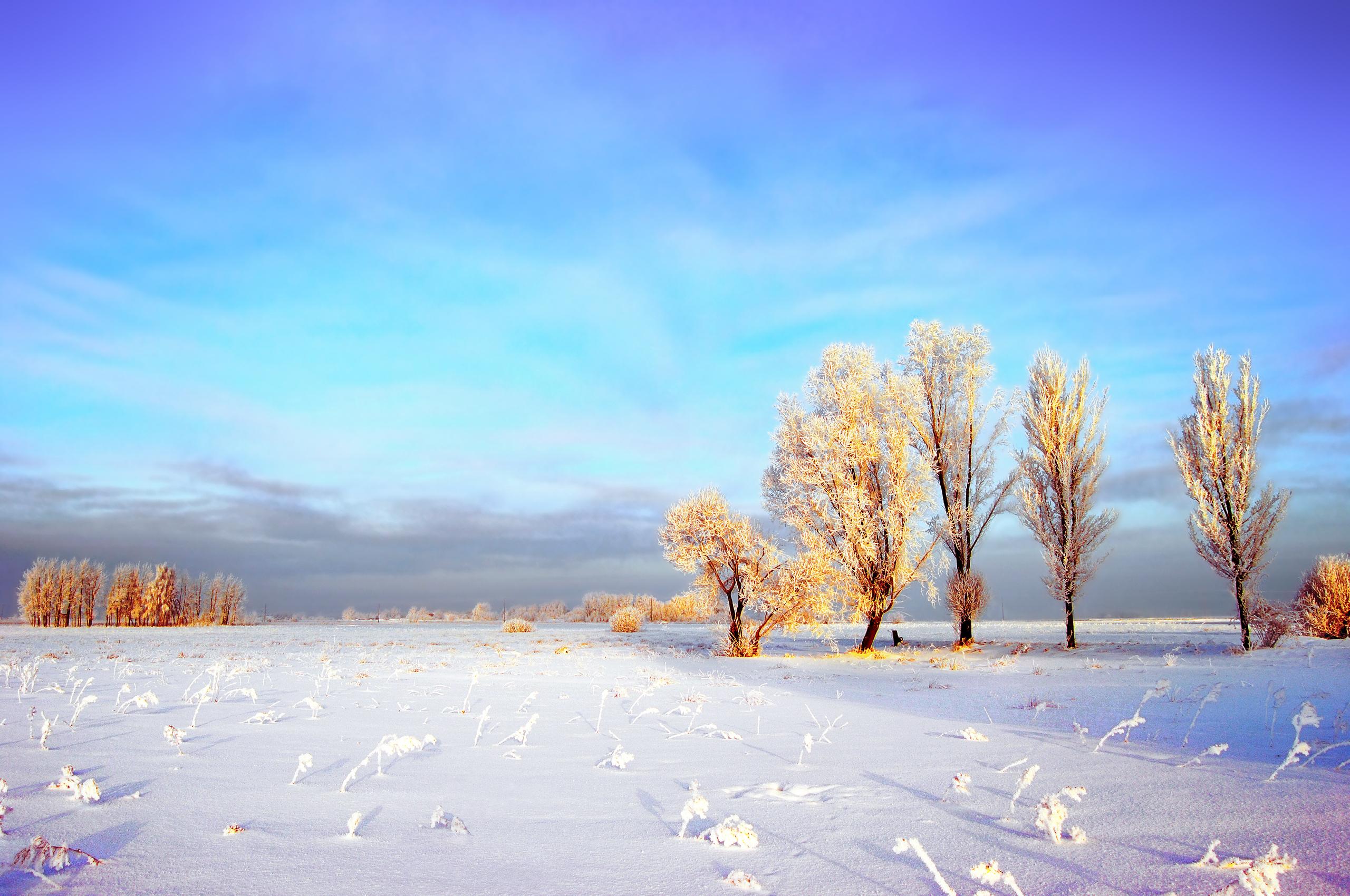 Снег деревья поле бесплатно