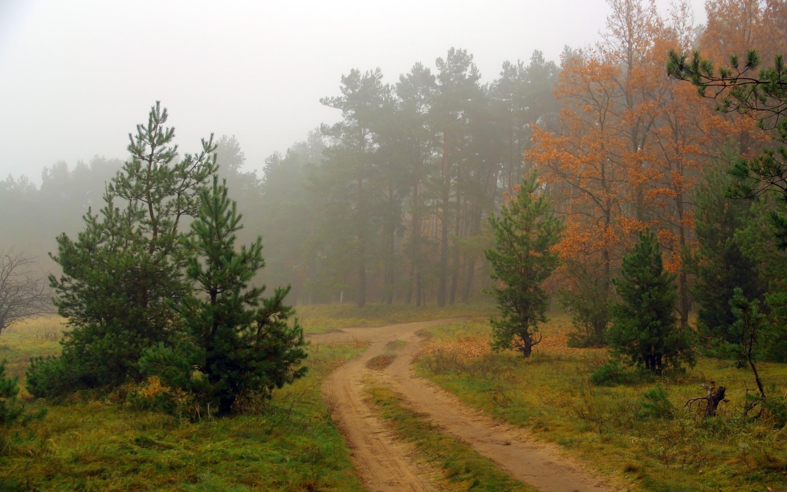 Туман над лесной речкой  № 636745  скачать