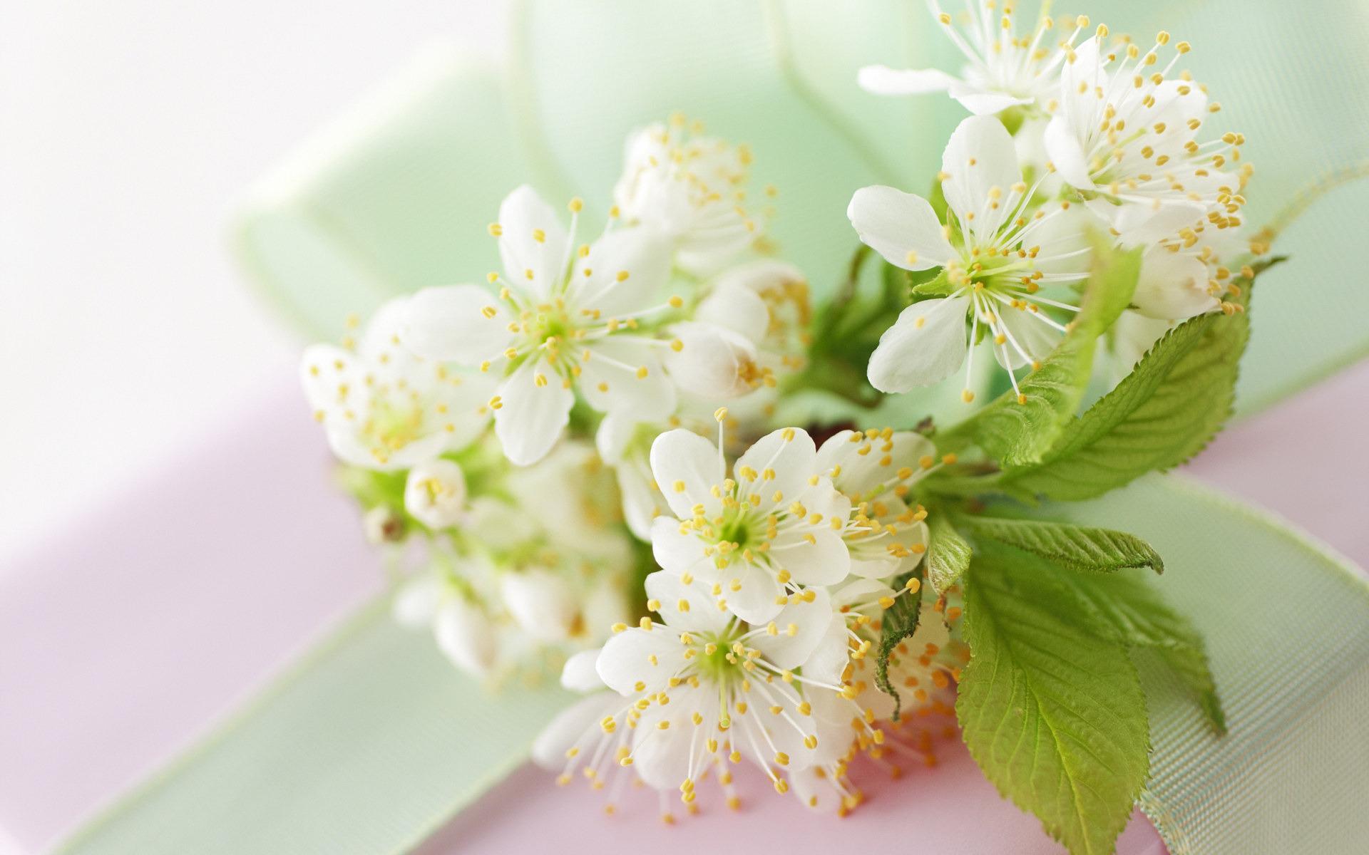 природа ветки белые цветы без смс