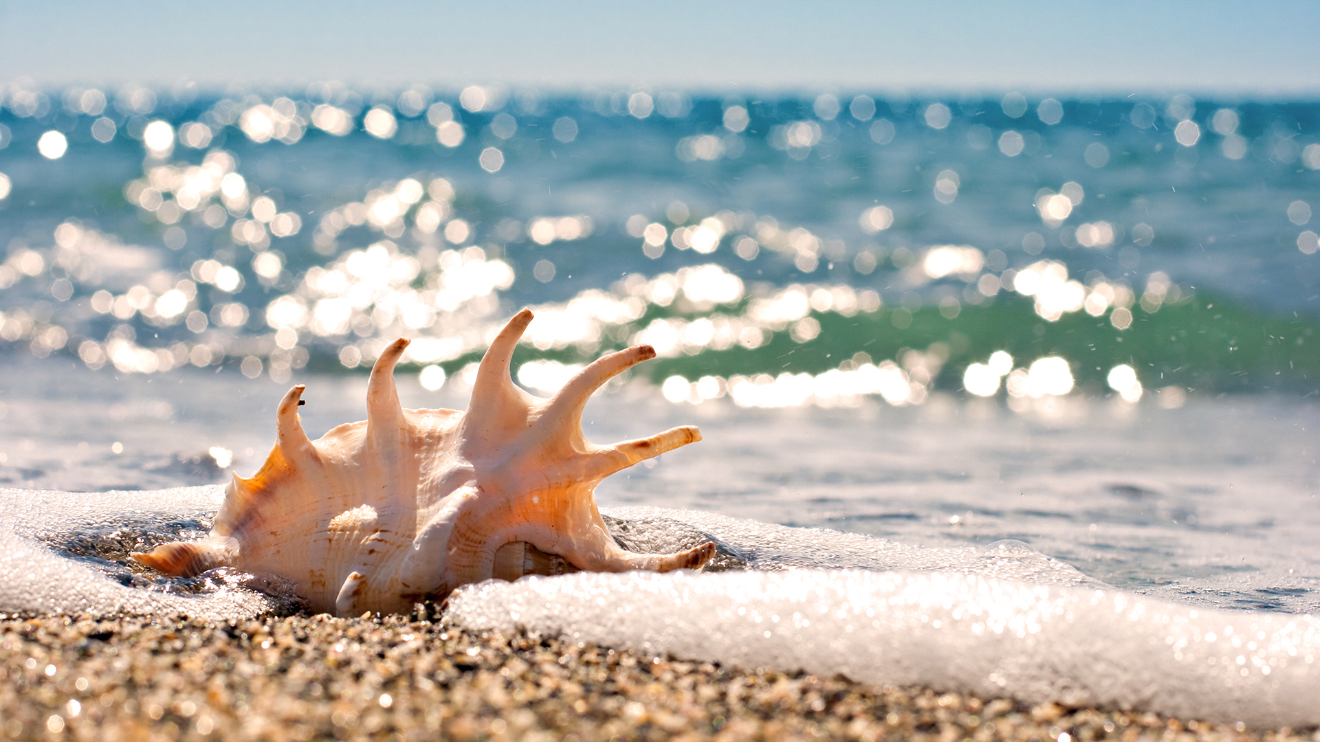морская соль ракушки полотенце отдых онлайн