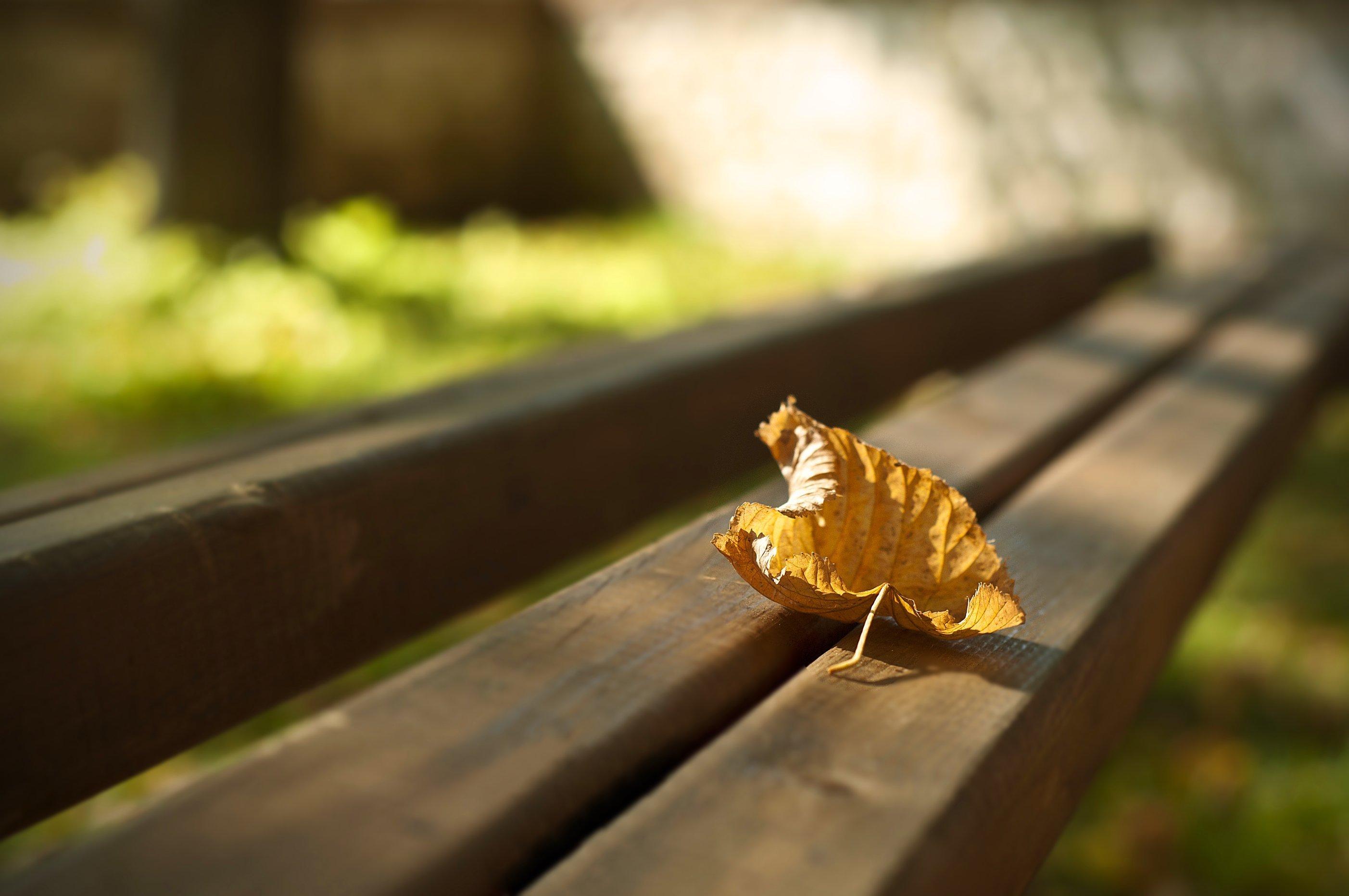 Осень листья лавка стол  № 3187460 без смс