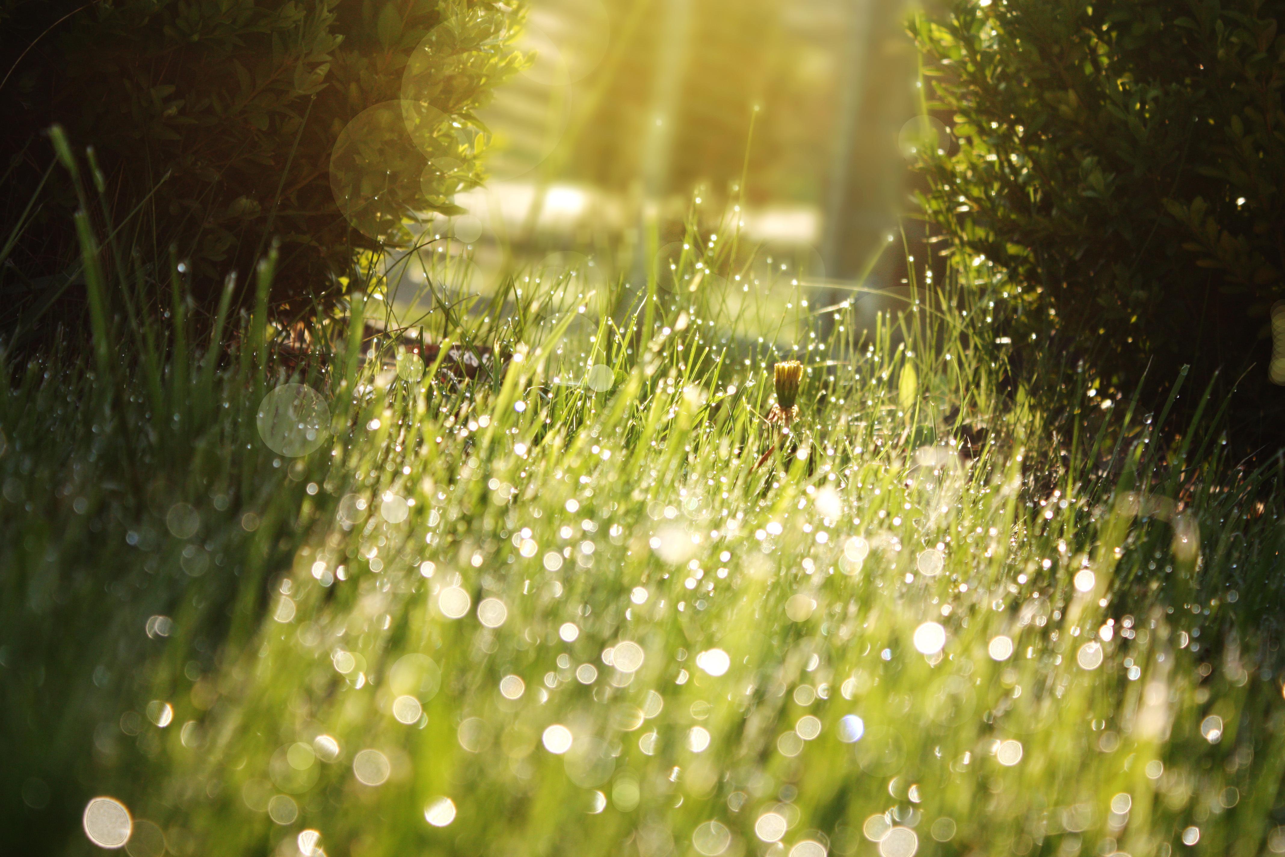 цветы солнце блики  № 1247200 без смс
