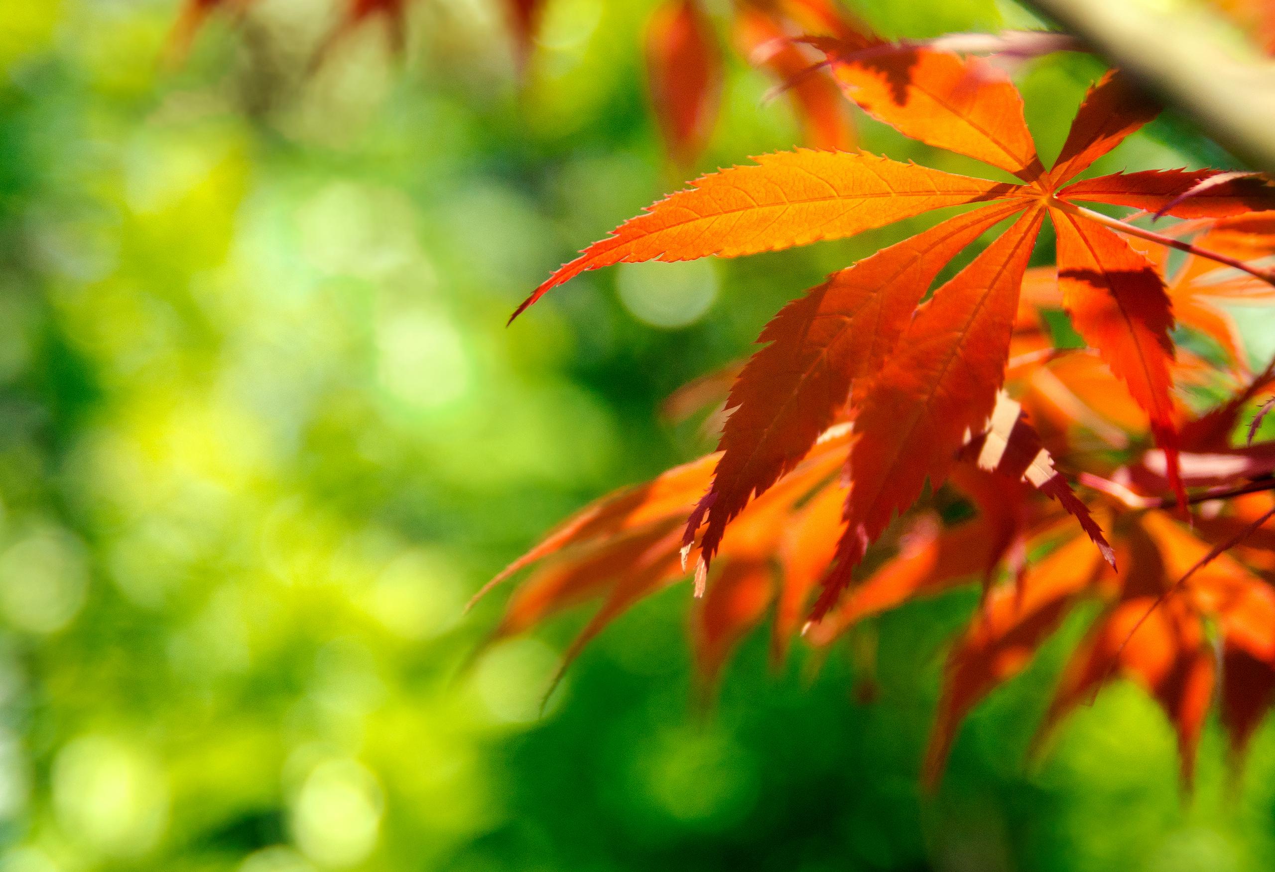 природа лист осень  № 543334 бесплатно