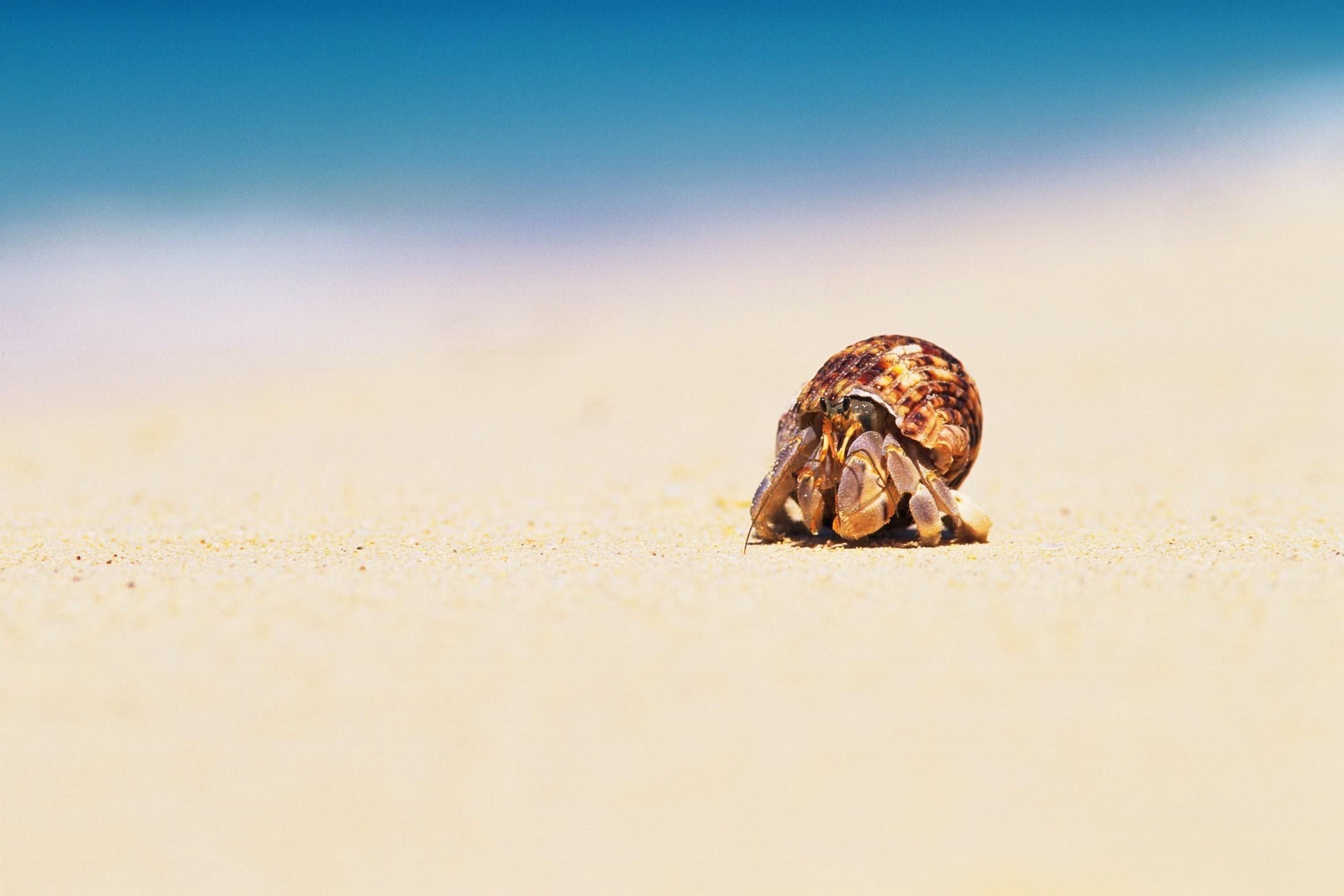 Краб на песке  № 96567  скачать