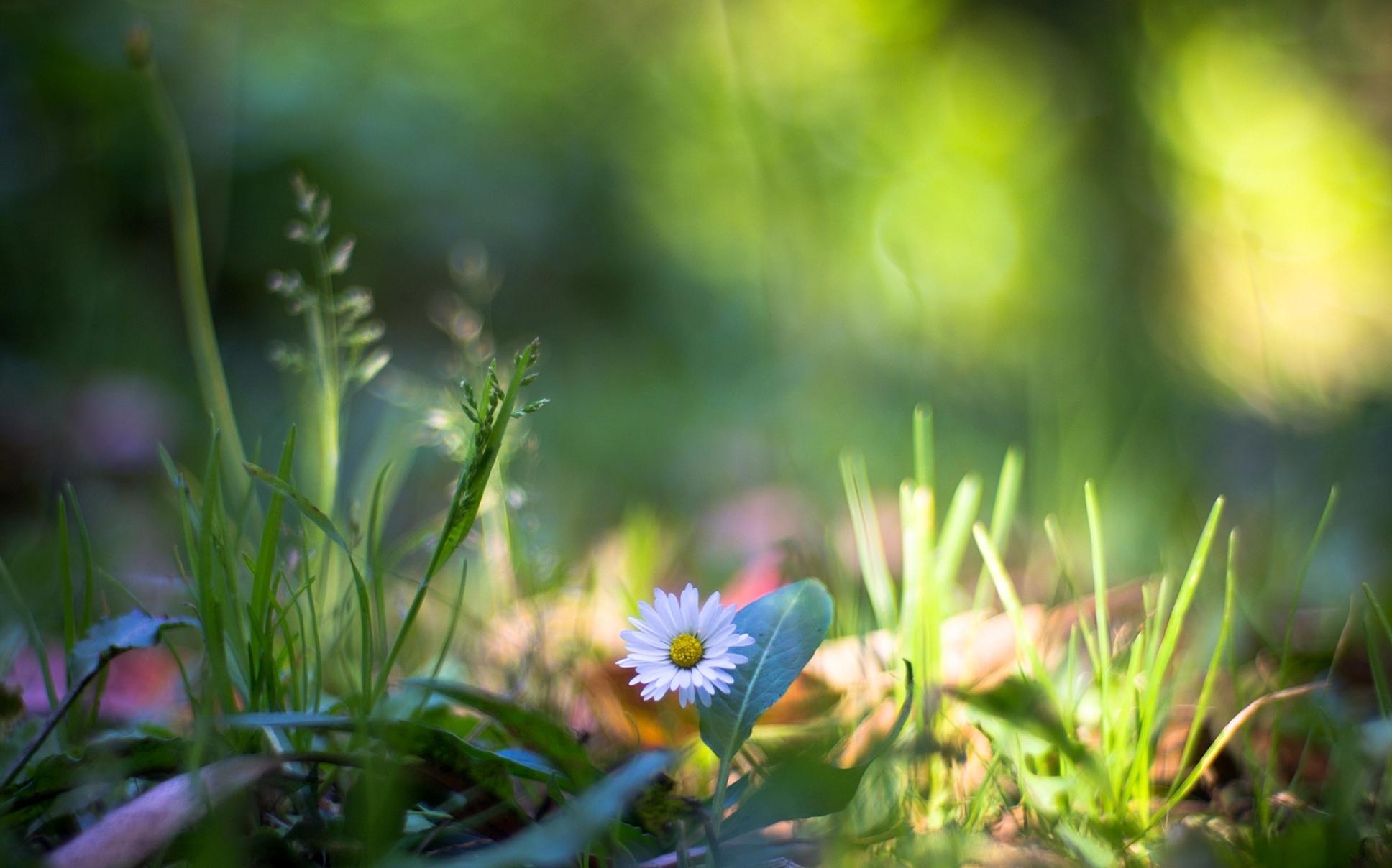 трава природа макро скачать
