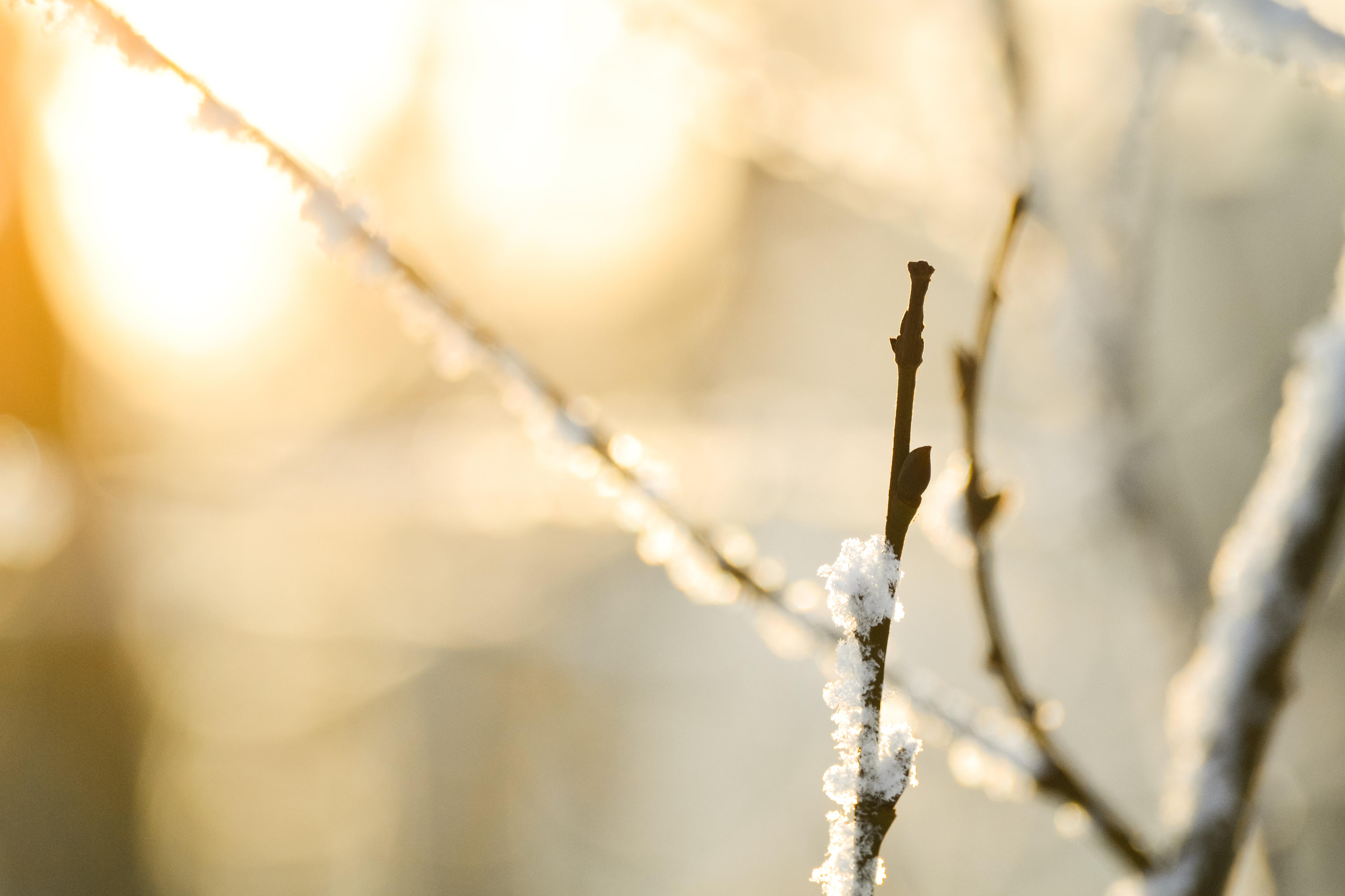 природа ветка снег  № 3089963  скачать