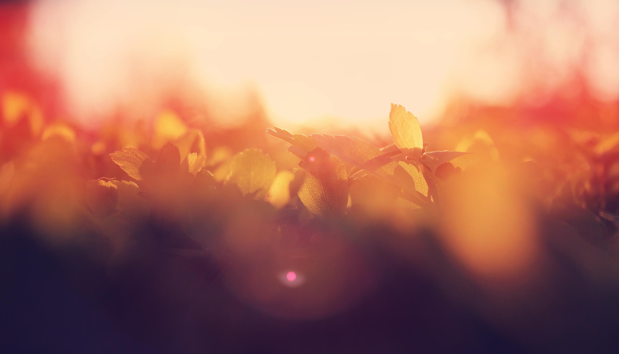 аризона рассвет лучи блики бесплатно